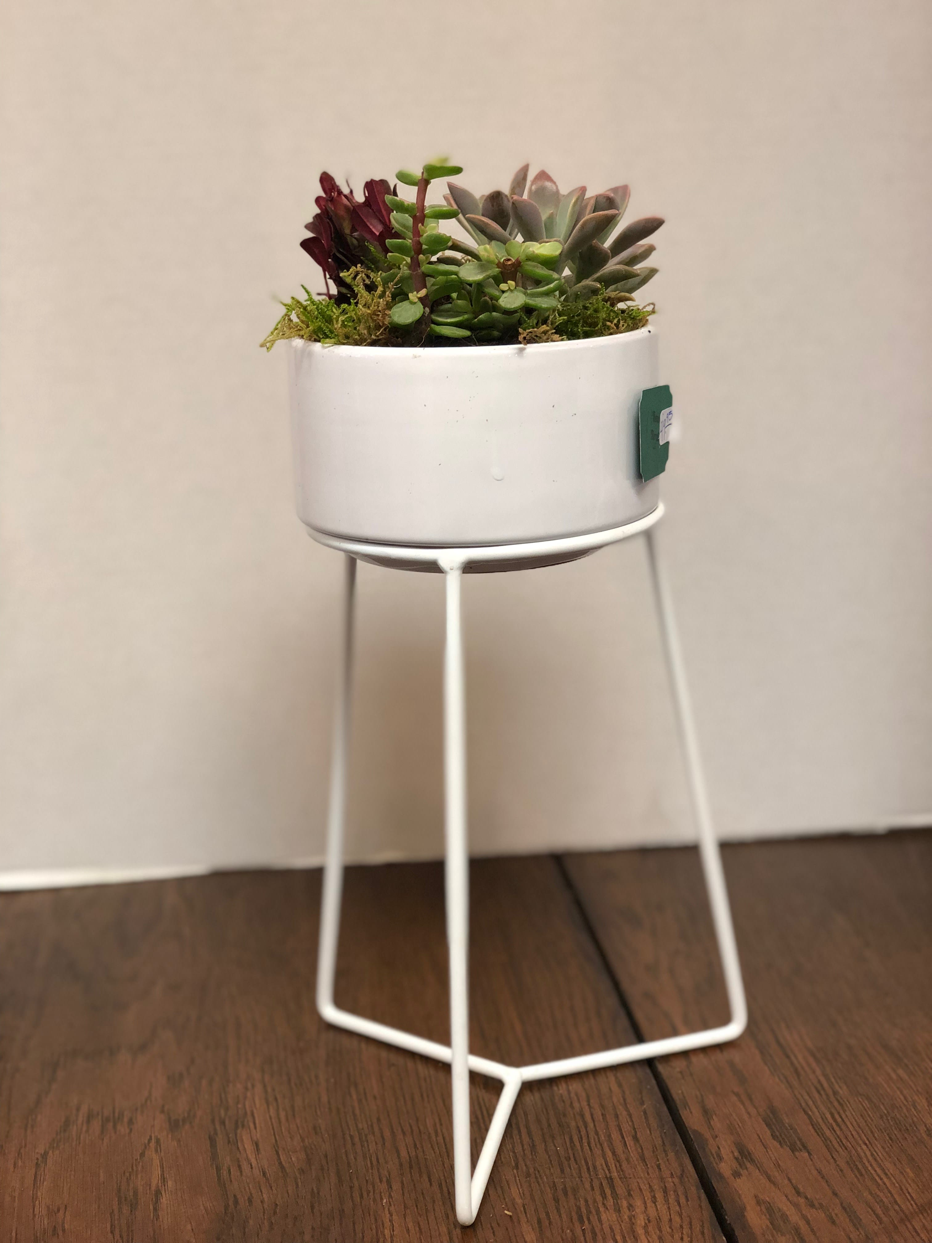 Modern White Ceramic Succulent Planter In Waupun Wi Rens Floral