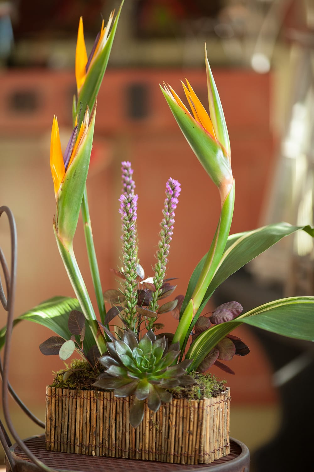 Maui. A contemporary tropical design in a low container. A striking gift for