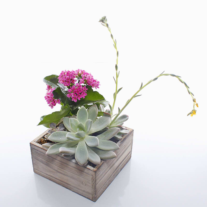 Blooming Succulent Garden in Driftwood in Dallas, TX | Forestwood Fine  Flowers