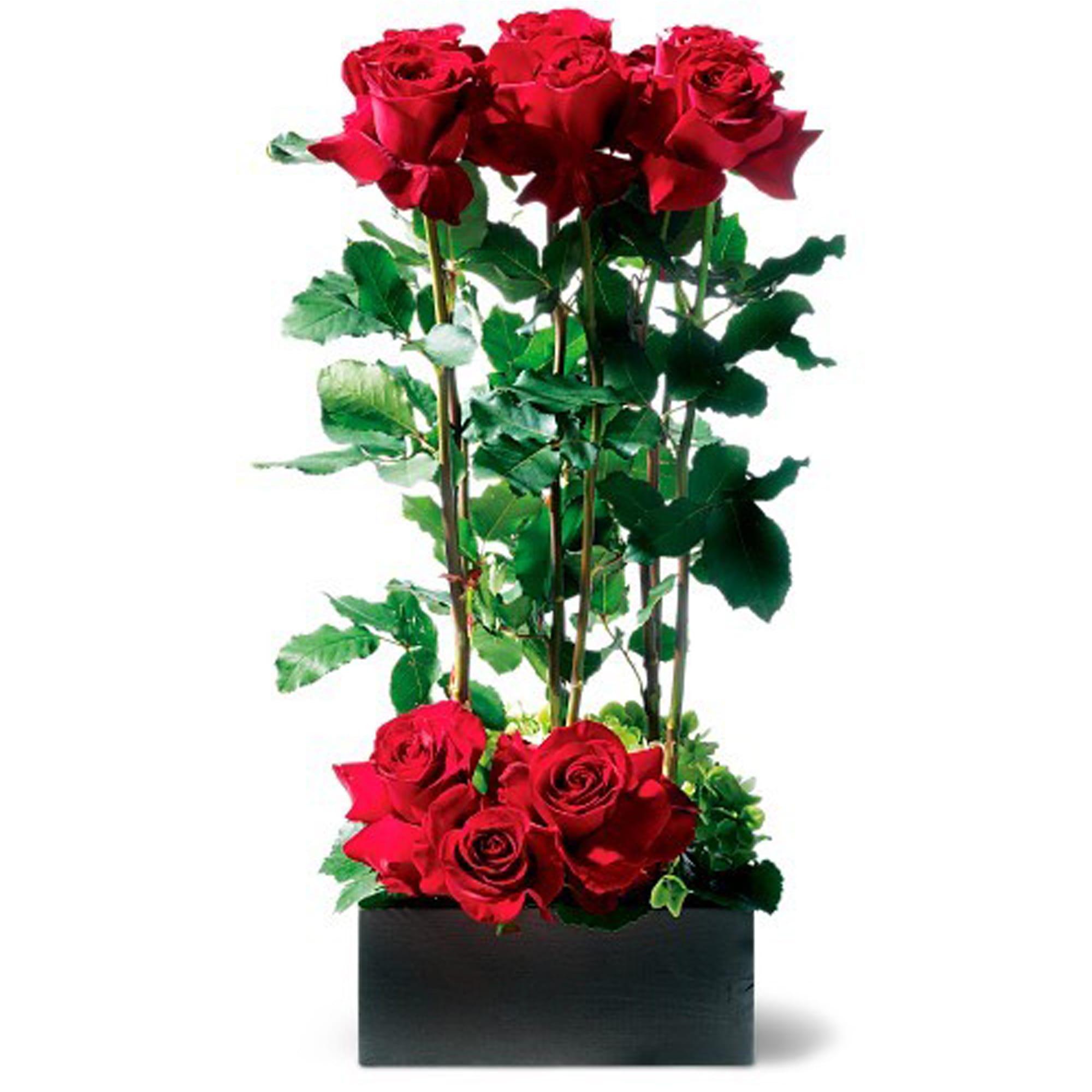 Flower Arrangements El Paso: Scarlet Splendor Roses In El Paso, TX