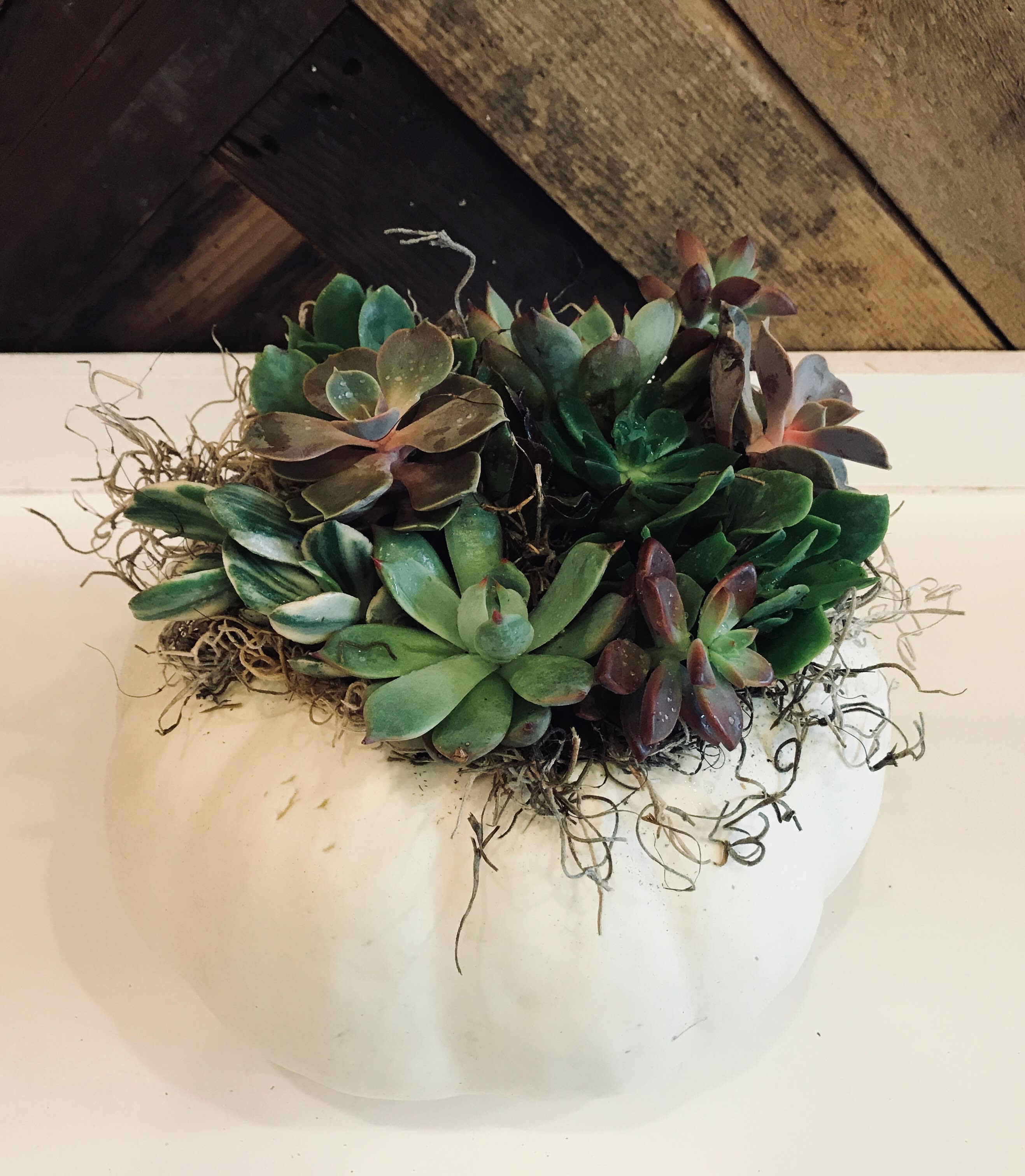 Living Succulent Pumpkin Centerpiece Available September