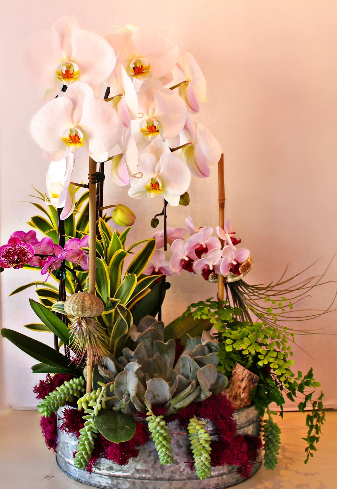 Artsy Orchids and Succulents