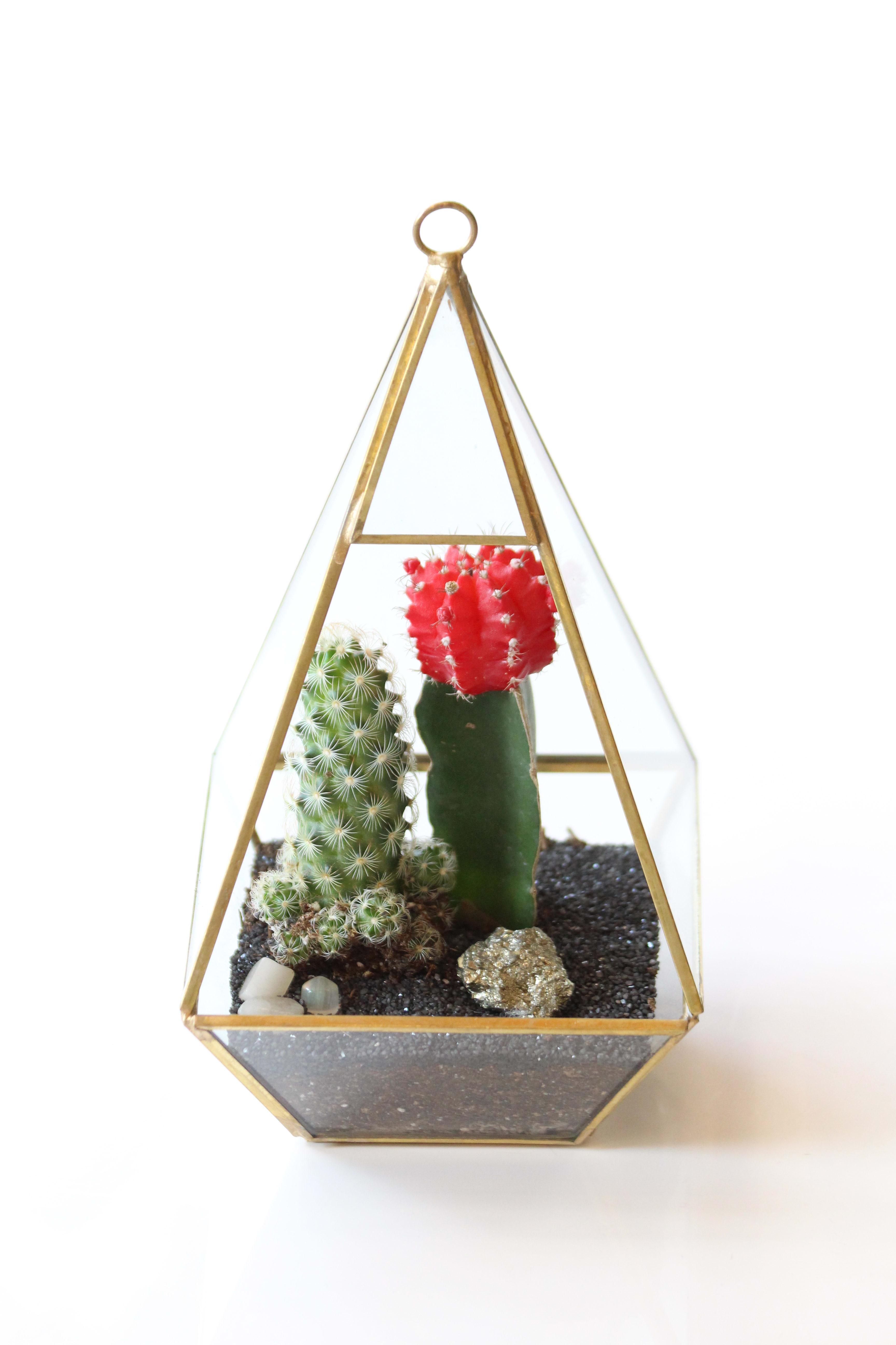 Geometric Terrarium Pyramid In Arcadia Ca Md S Florist