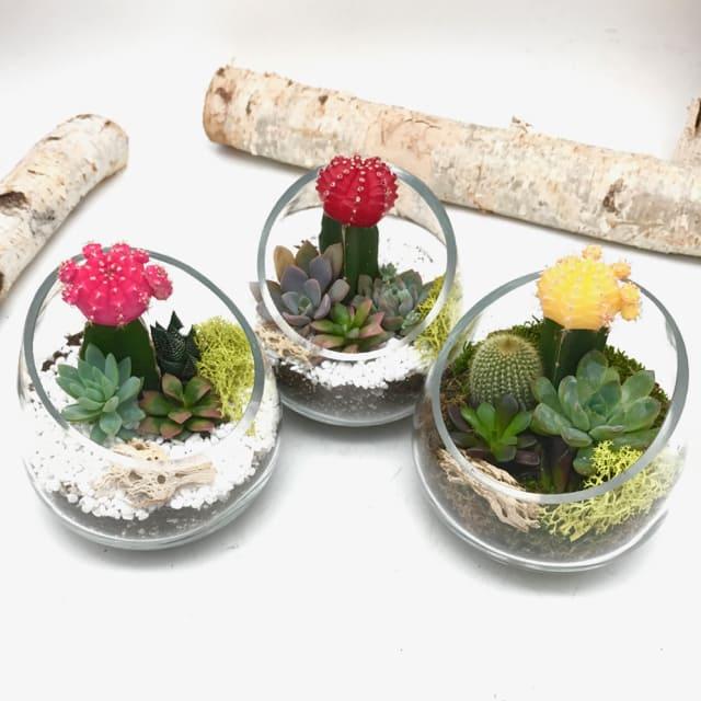 Cutie Cacti Terrarium By Wowsome Blossom
