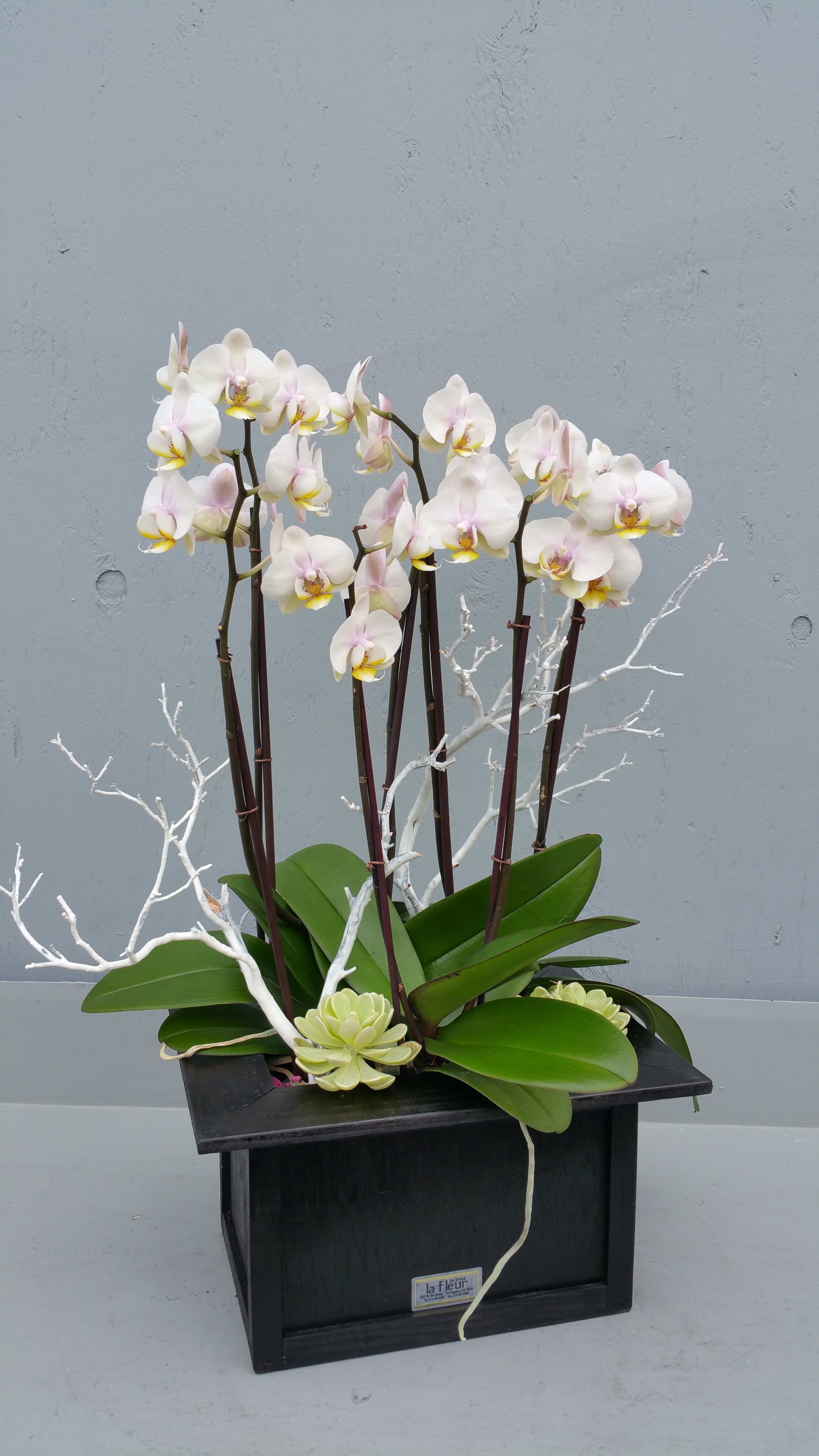 Mini Orchid Plants In Los Angeles Ca La Fleur By Tracy