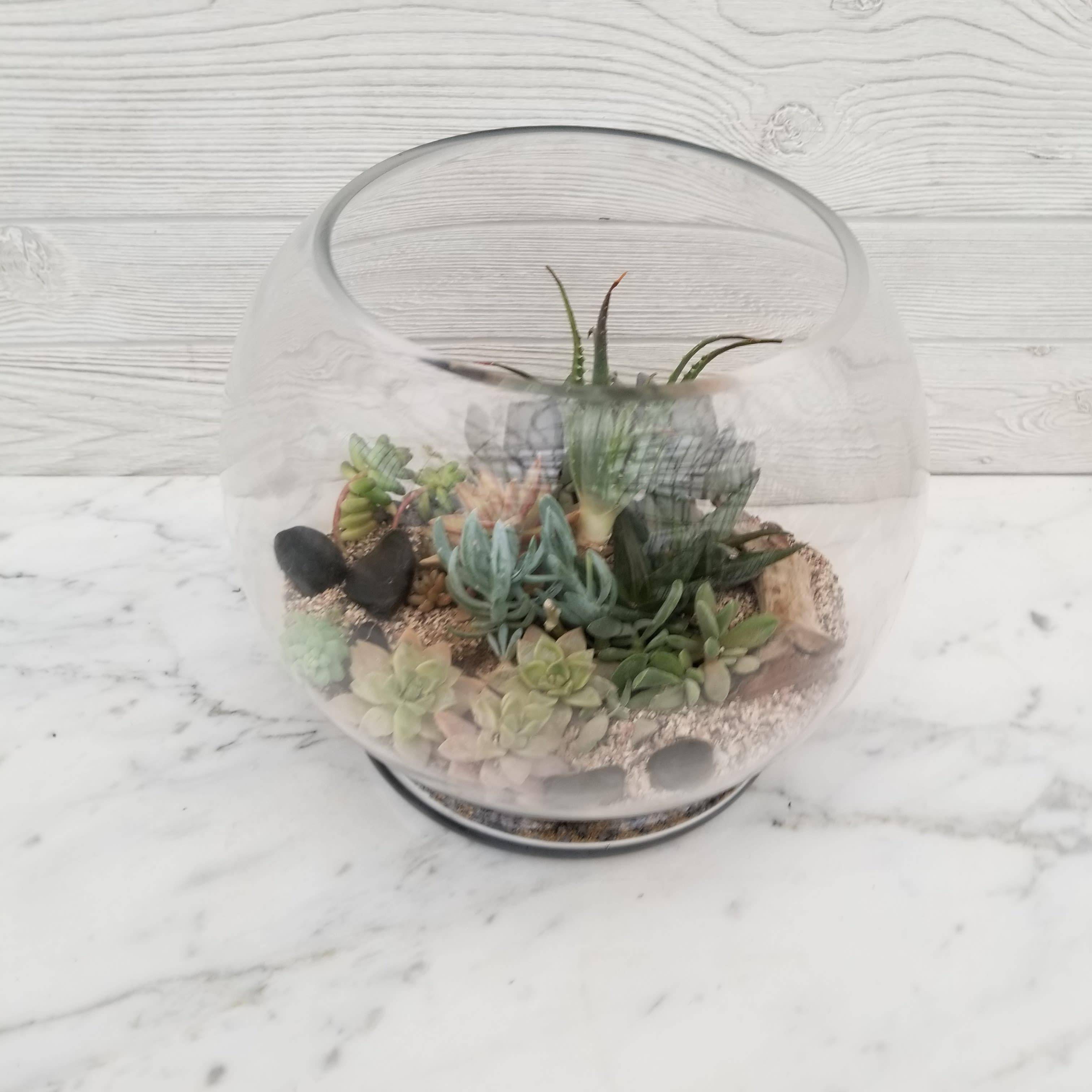 Succulent Terrarium Globe By West End Florist Garden Center