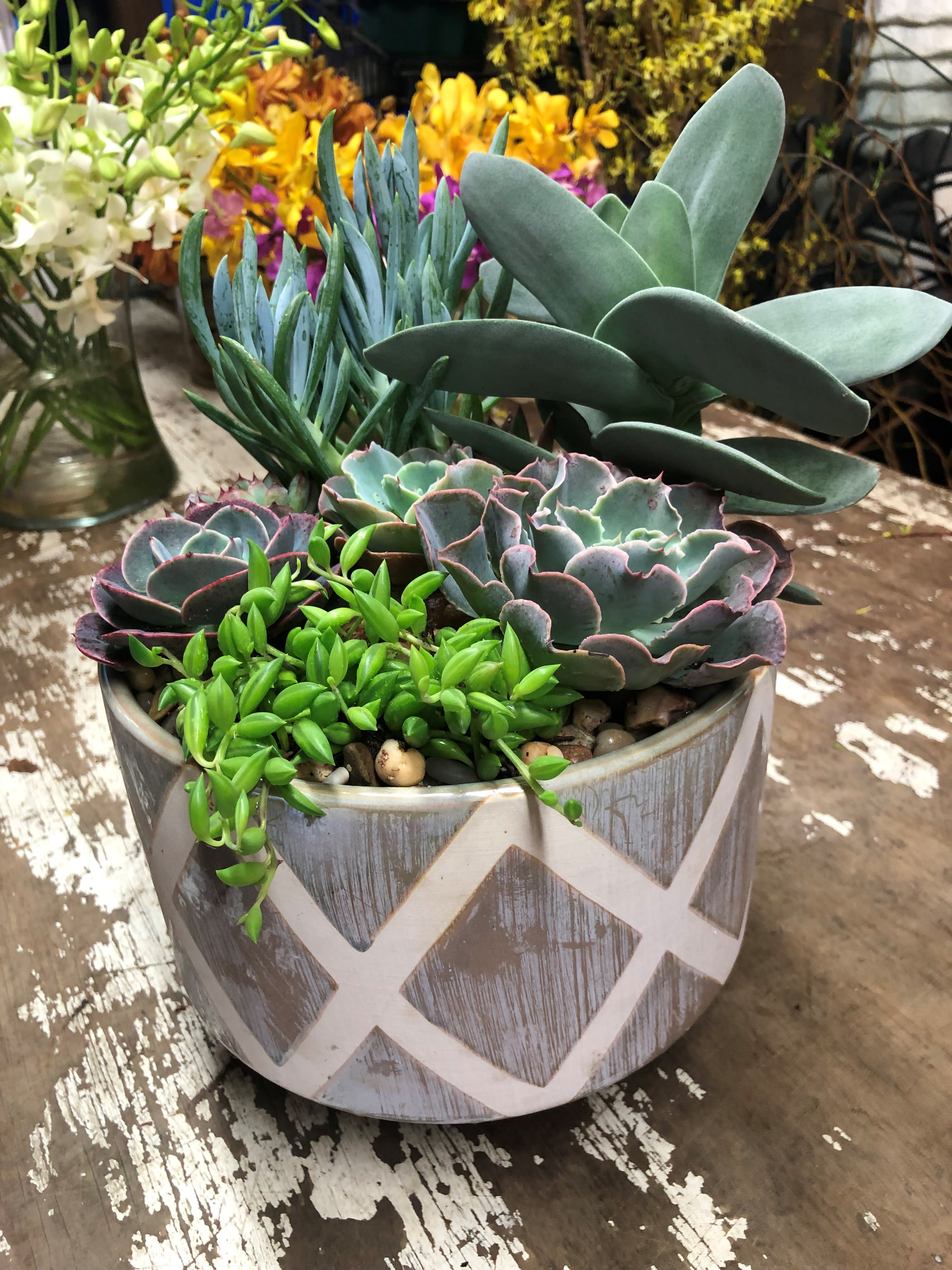Elegance With Succulents
