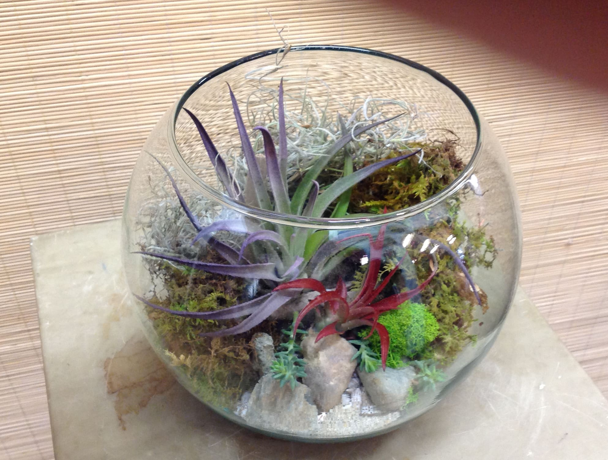 Air Plant Terrarium In Richmond Ca Park Florist