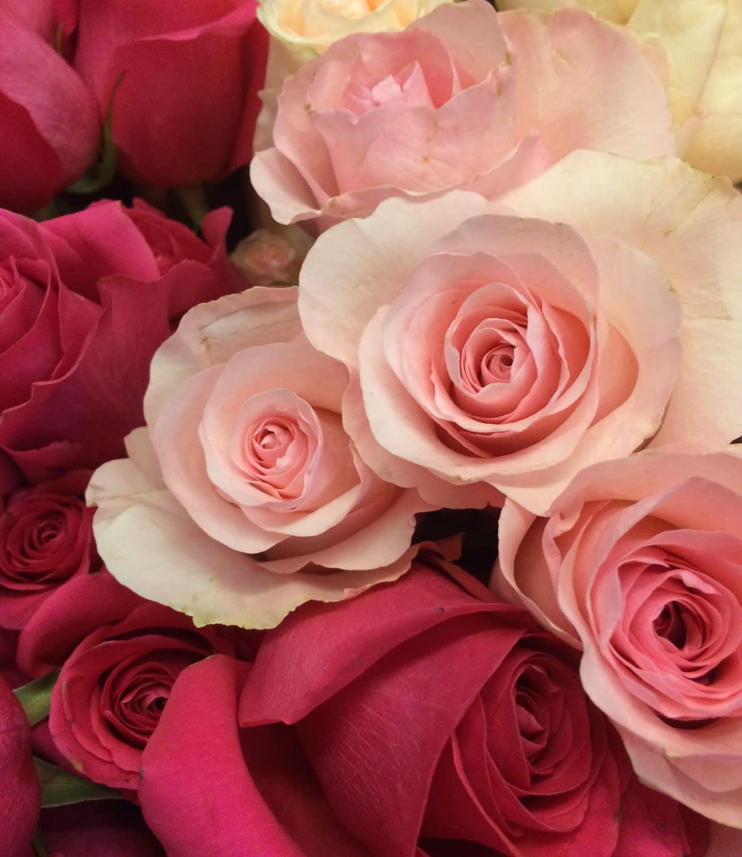 Dozen Pink Roses In Kenosha Wi Summers Garden