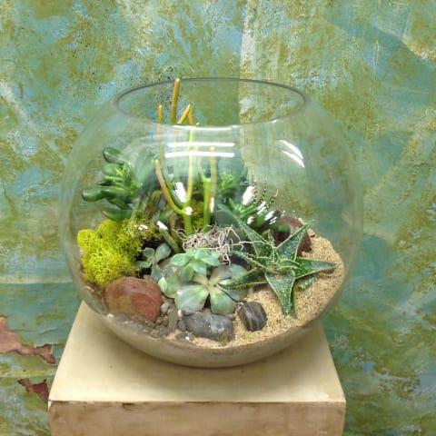 Succulent Terrarium In Martinez Ca Park Florist Martinez