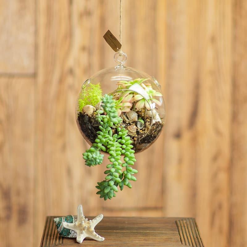 Hanging Succulent Terrarium In Newport Or Newport Florist And Gifts