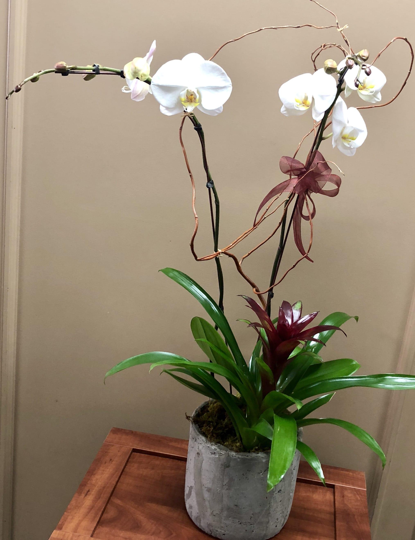 Orchid Splendor