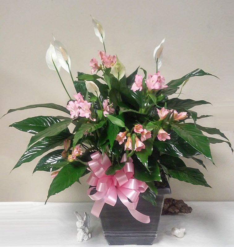 Large Peace lily in Pink by Weathers Flower Market