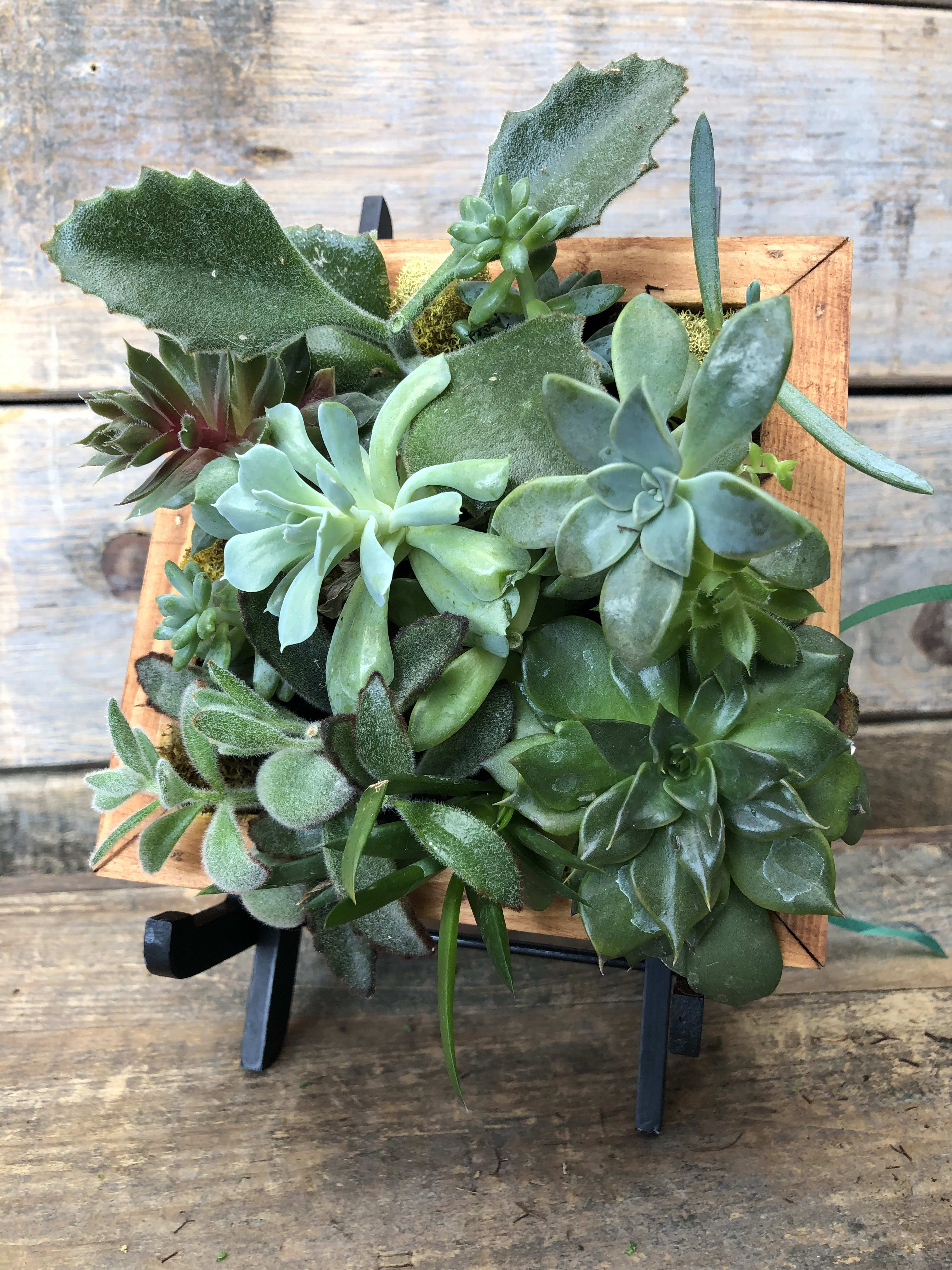 Succulent Frame In Pittsford Ny Gallea S Greenhouse Florist