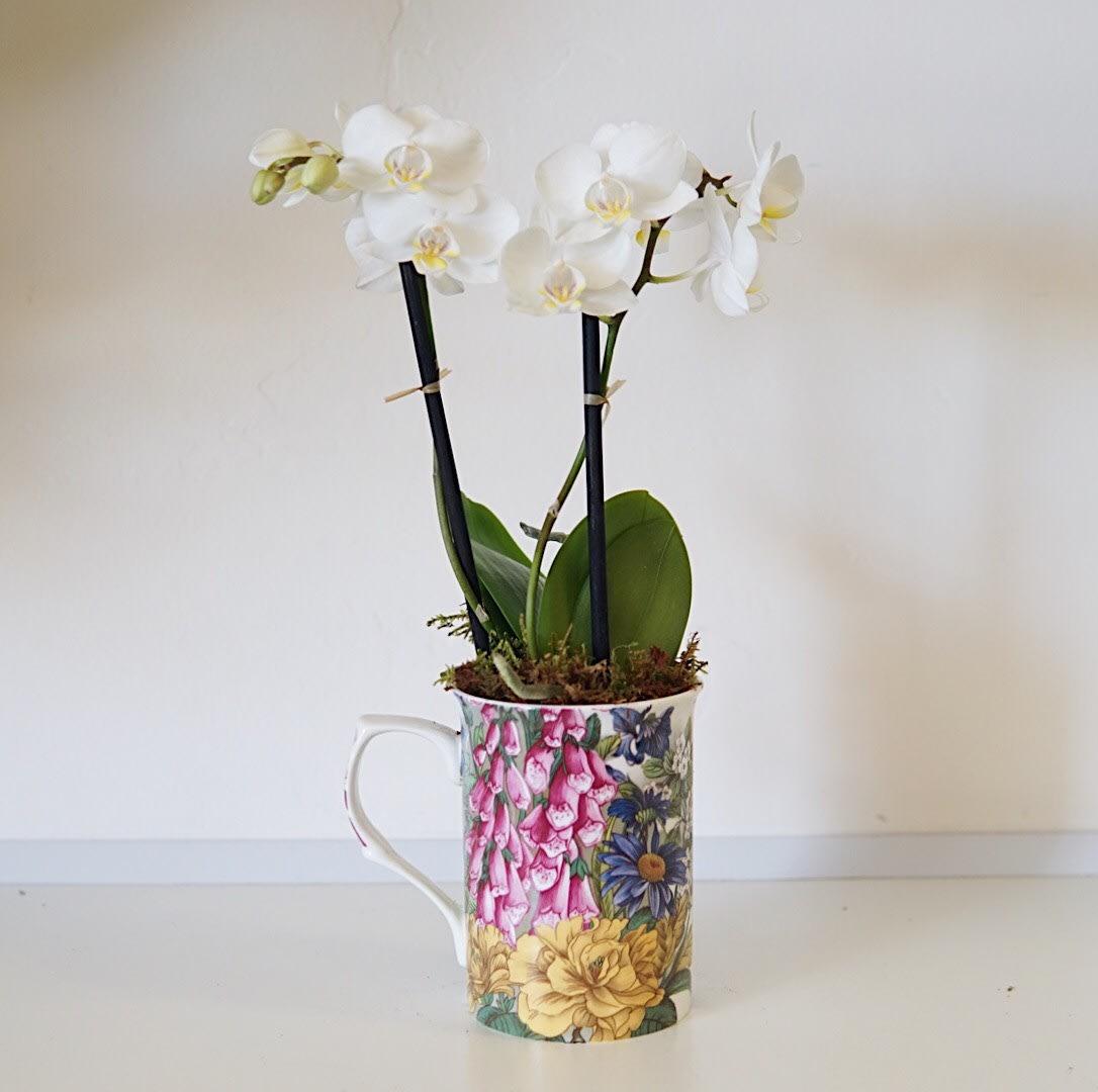 Mini Mug Orchid