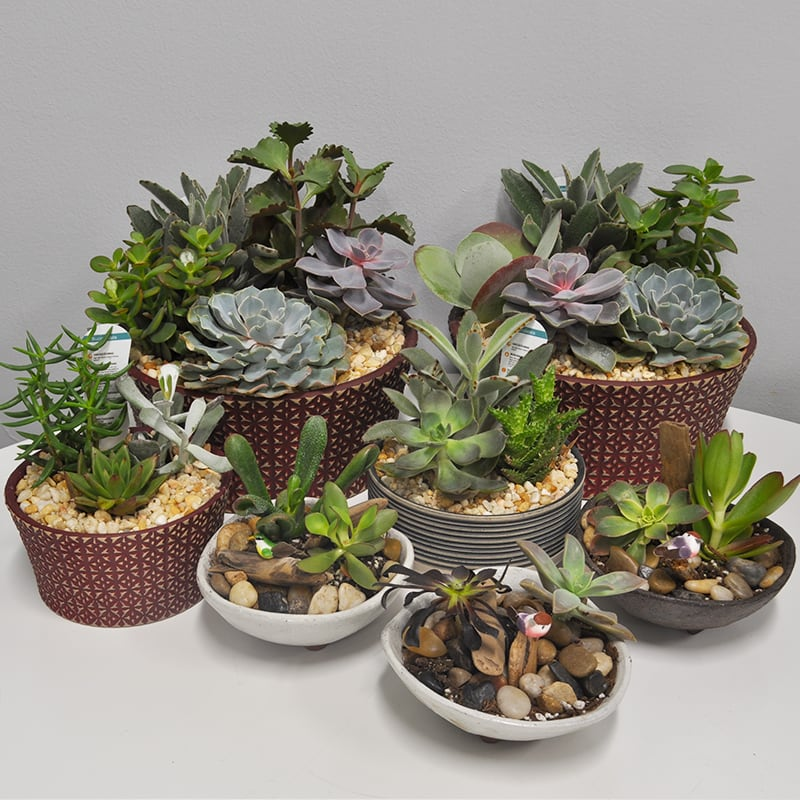 K410 Assorted Succulent Gardens By Kiko S Flower Gifts