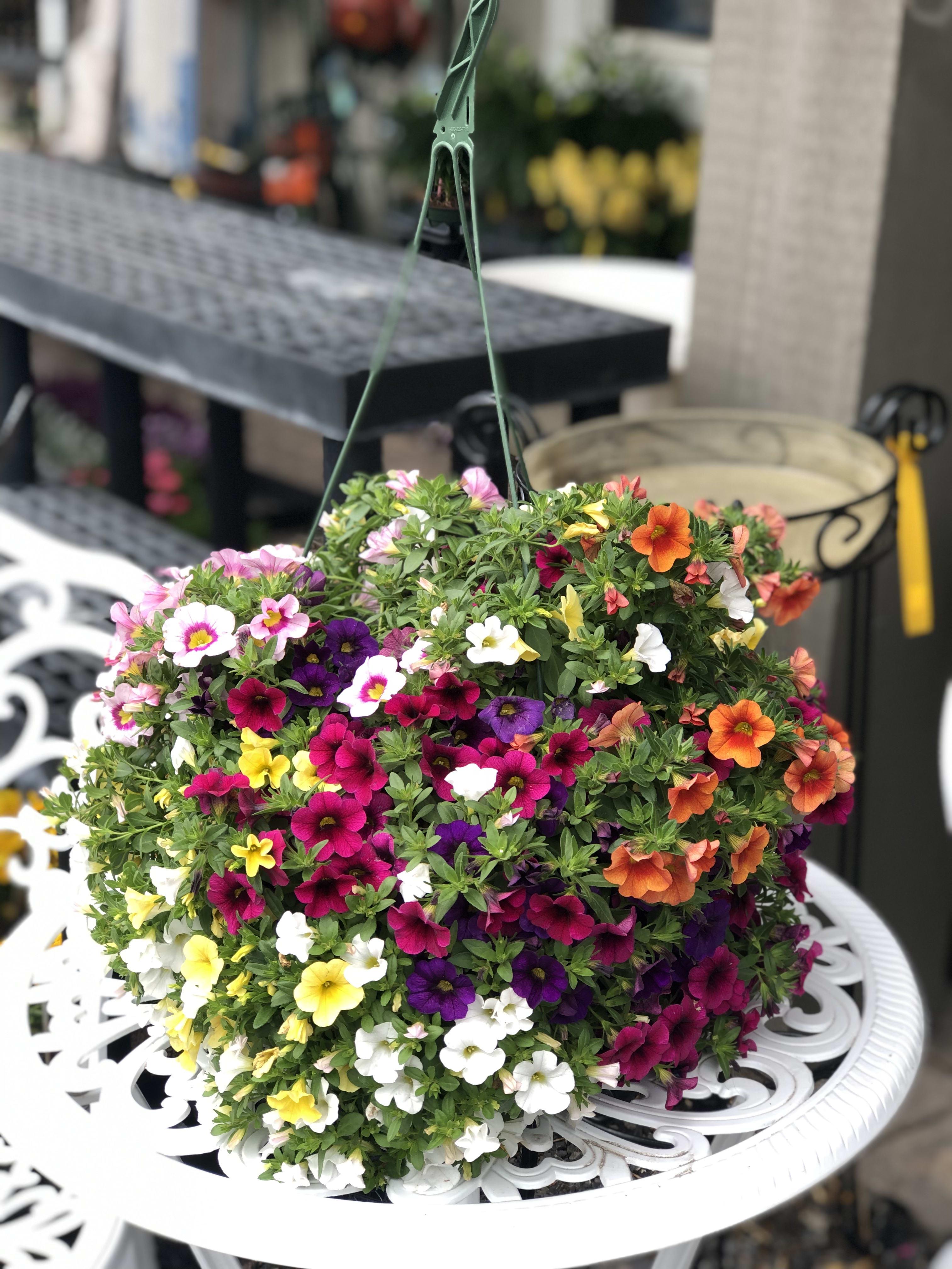 Geliefde Gorgeous Hanging Baskets in Pottstown, PA   Achin' Back Garden EY99