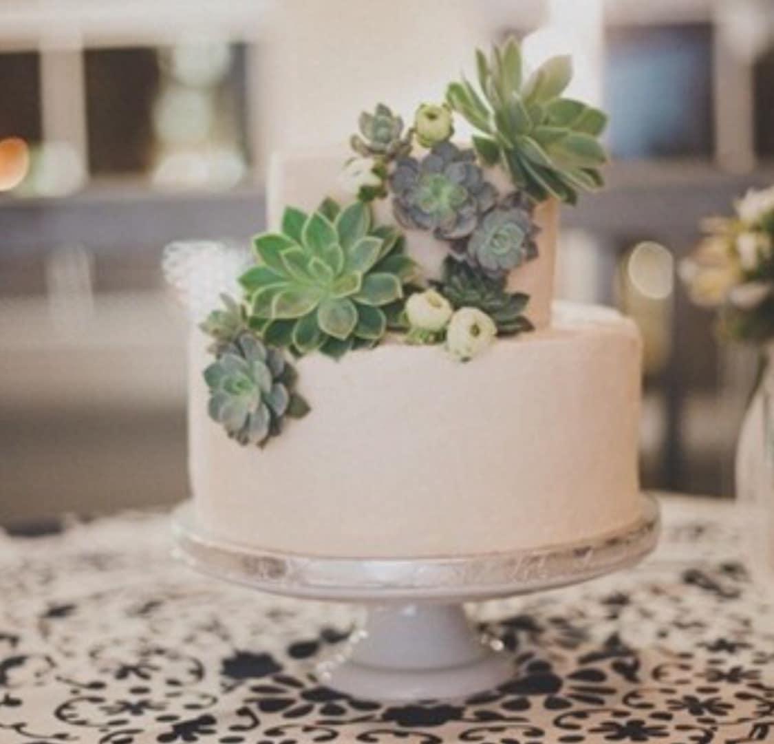 Cake Succulents In Charleston SC