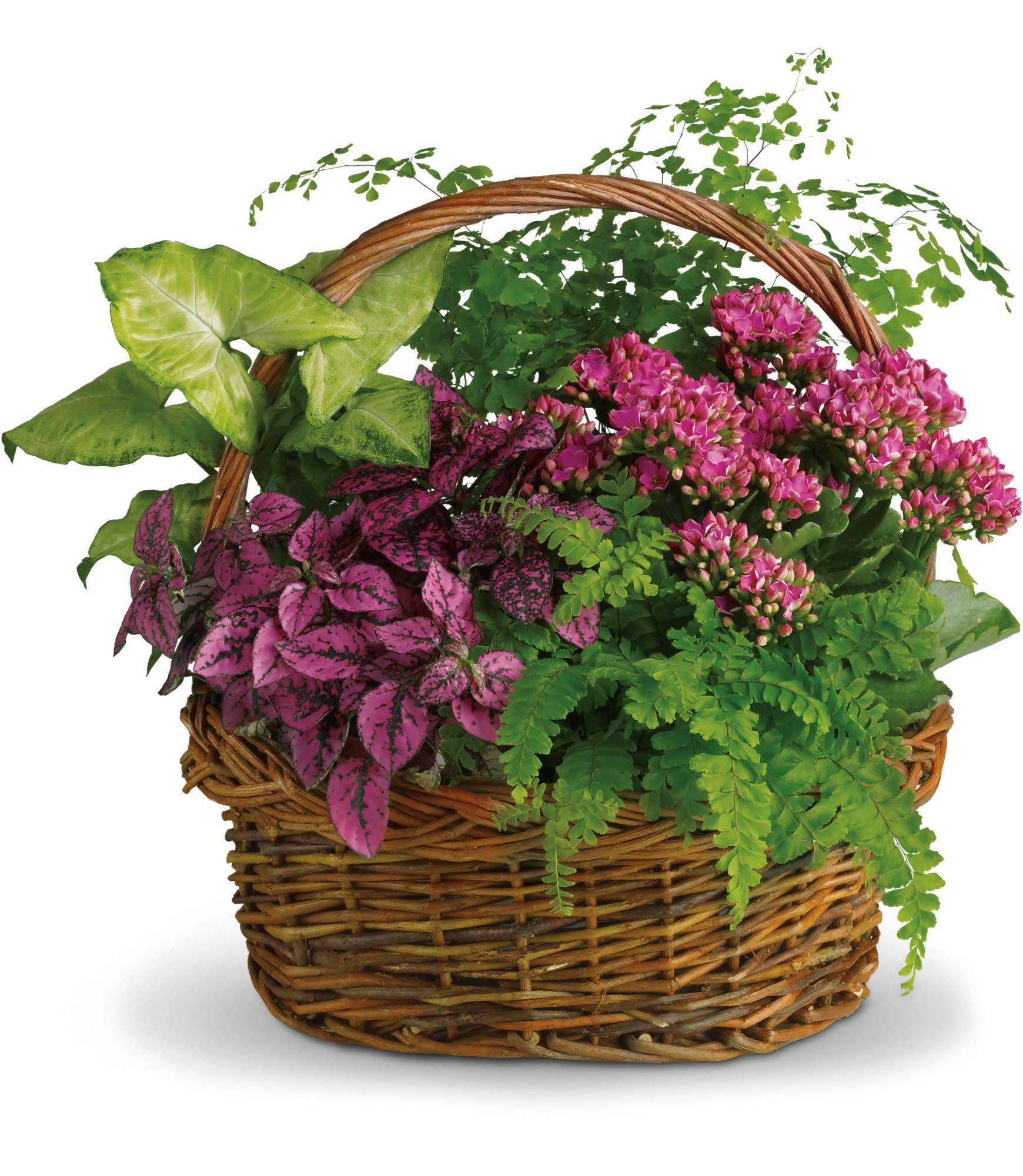 ba09cb897e Secret Garden Basket in Beeville, TX   Zimmer Floral and Nursery