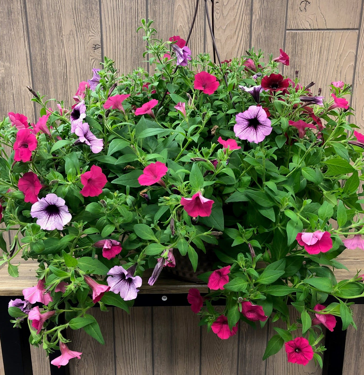 Zeer Petunia Blooming Hanging Basket in Grand Rapids, MN   North In Bloom GY64