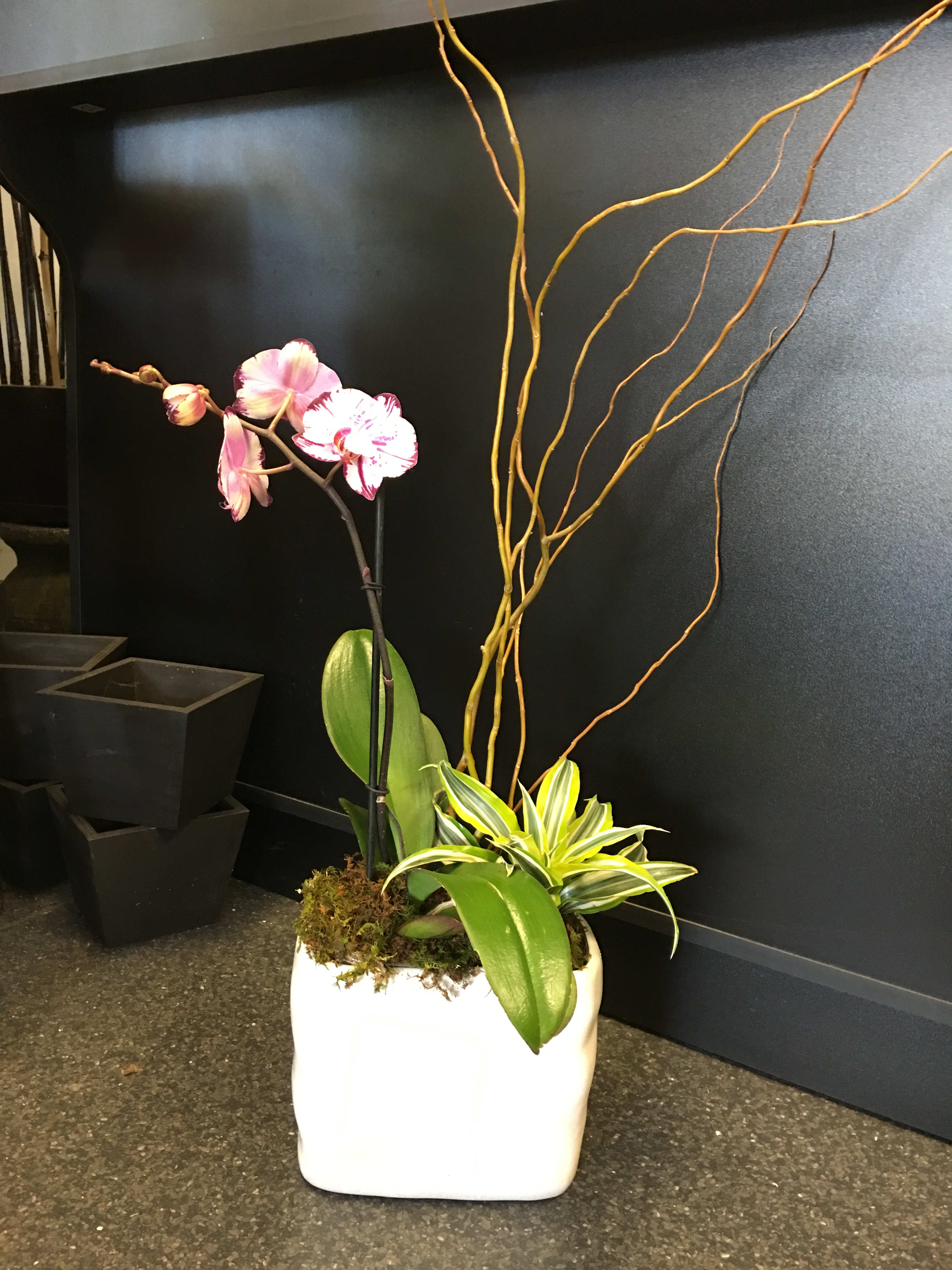 Not take asian style planters are mistaken