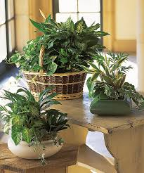 orted green house plants in a basket or ceramic planter by Flowers on colorful house plants, non-toxic house plants, small house plants, soothing house plants, robust house plants, weather proof house plants, hypoallergenic house plants, fragrant house plants, lightweight house plants, compact house plants, organic house plants, portable house plants, rugged house plants, elegant house plants, night blooming house plants, refreshing house plants, cool looking house plants, inexpensive house plants, strong house plants, easy to maintain house plants,