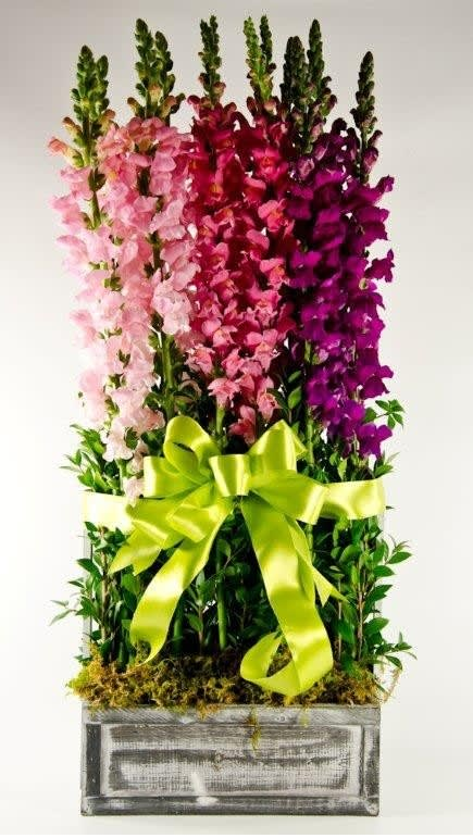 Snapdragon Garden by Wholesale Flowers