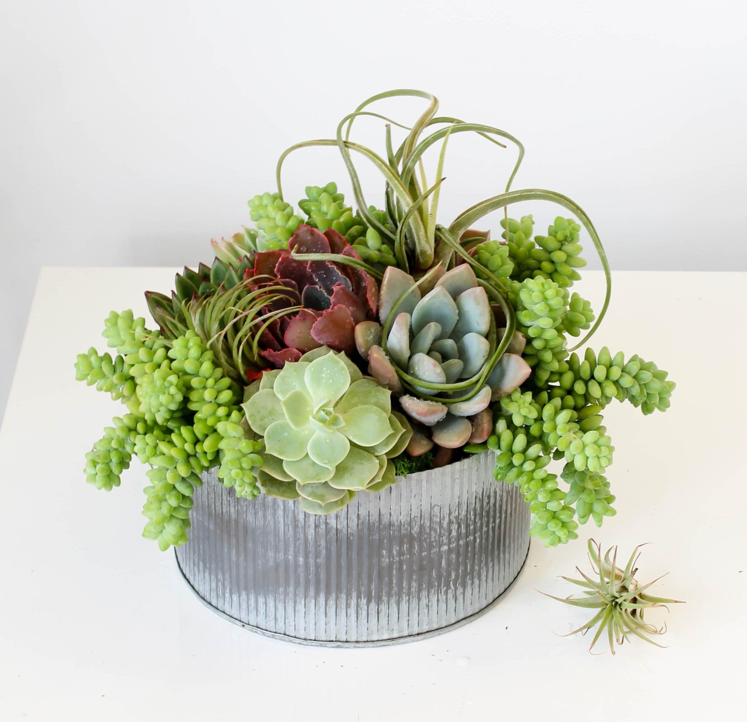 Succulent Sanctuary in Los Angeles, CA | Sonny Alexander Flowers