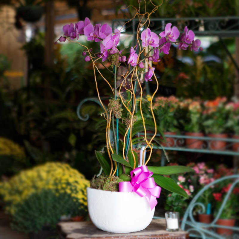 Purple Orchids By Hirni S Wayside Garden Florist