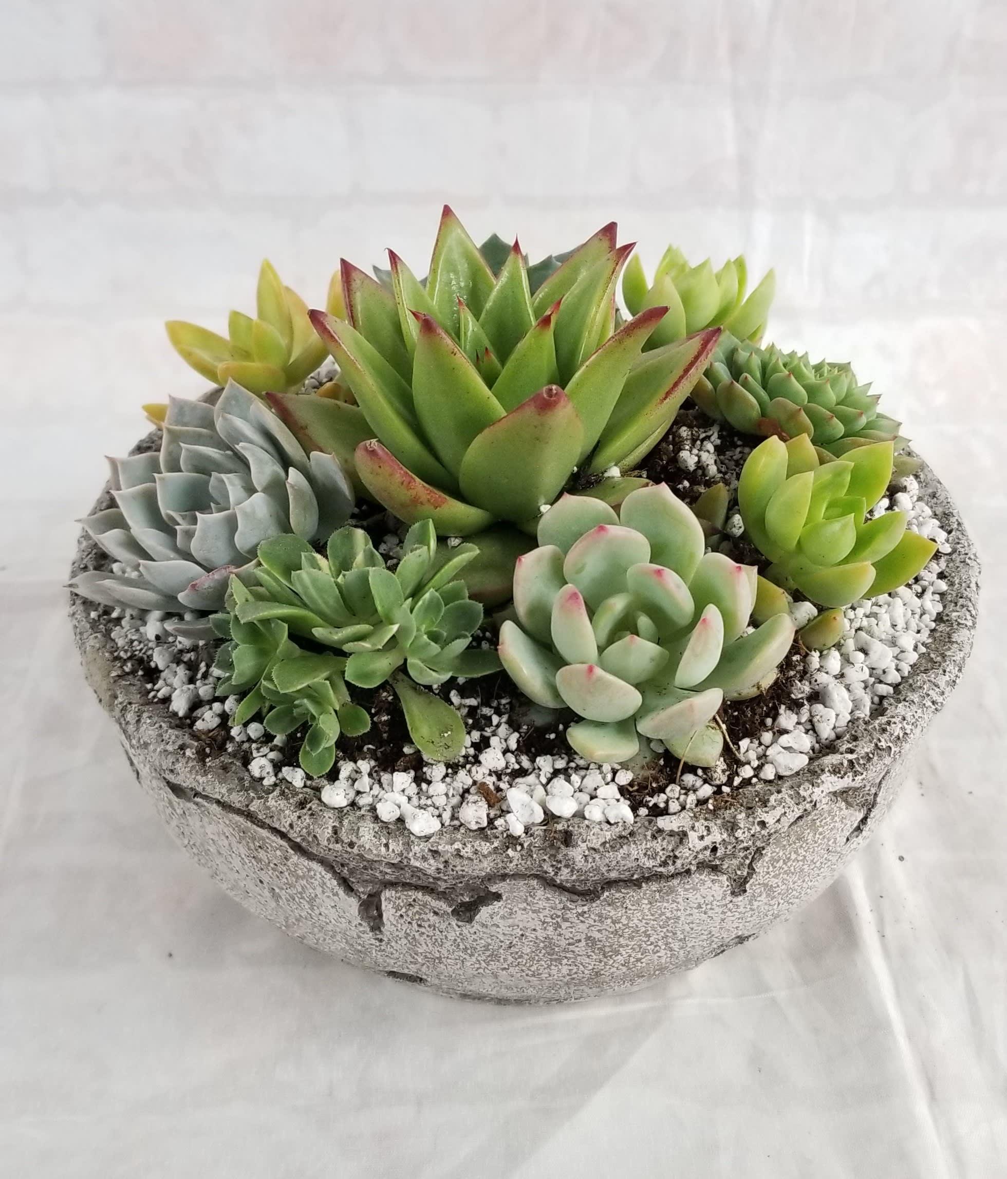 8 Round Cement Succulent Planter In Davis Ca Strelitzia Flower