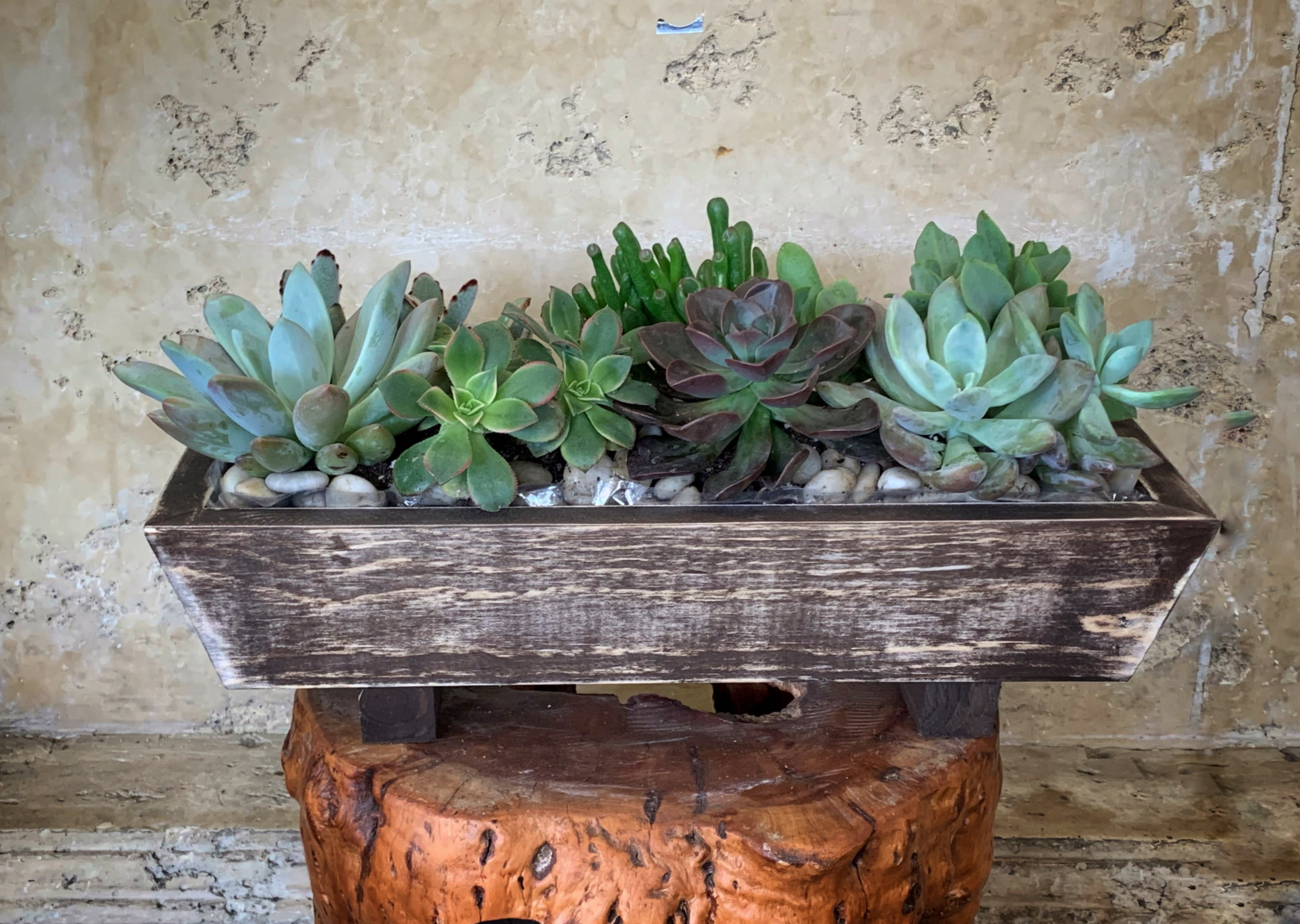 Wood Box Succulents In Marina Del Rey Ca Heathers Flowers