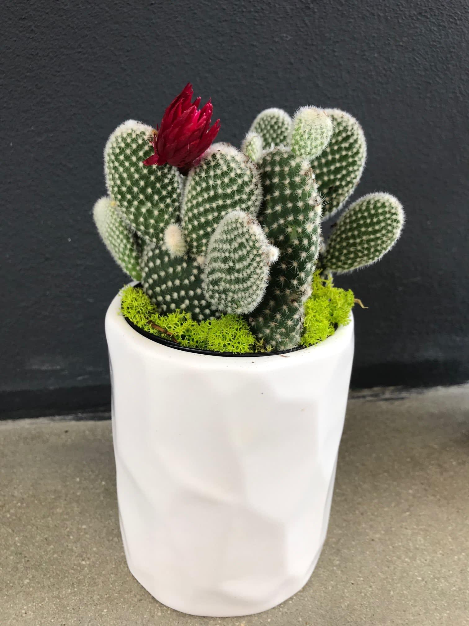 Mini Cactus Garden In Fort Lauderdale Fl La Fleur Florals And