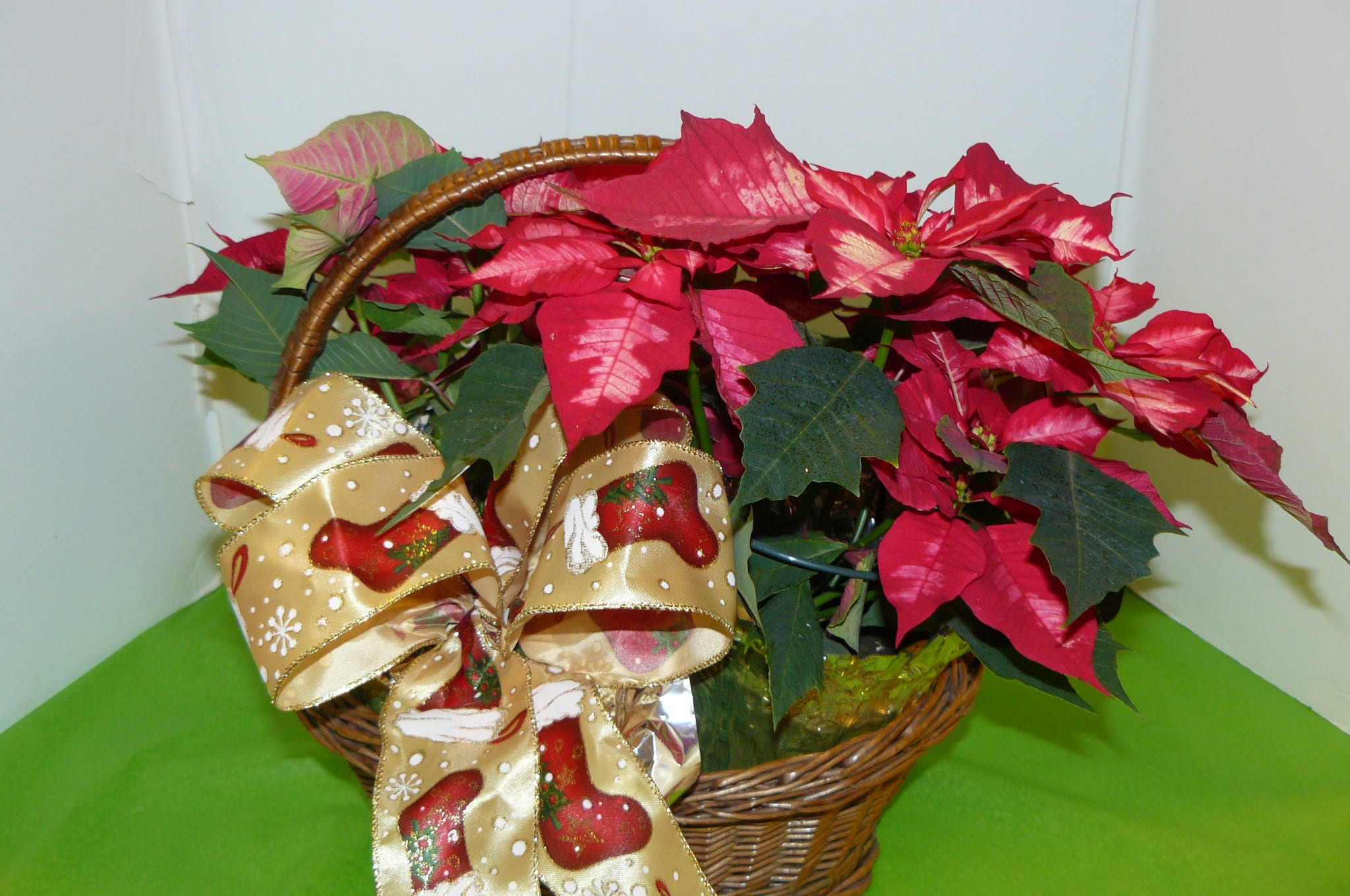 Poinsettia Plants In A Basket With Bow In Bedminster Nj