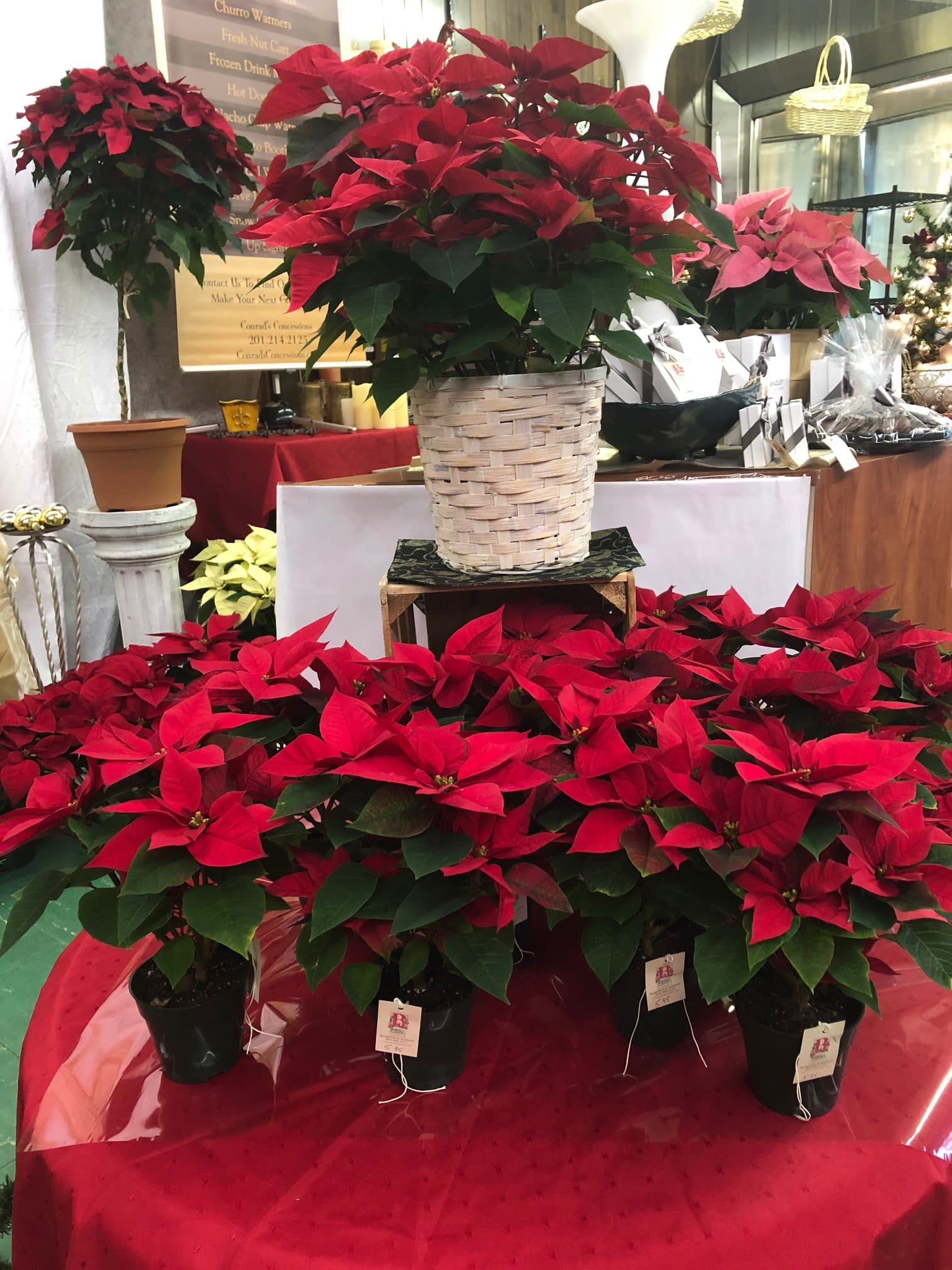 Poinsettia Plants In Bergenfield Nj Broderick S Flowers