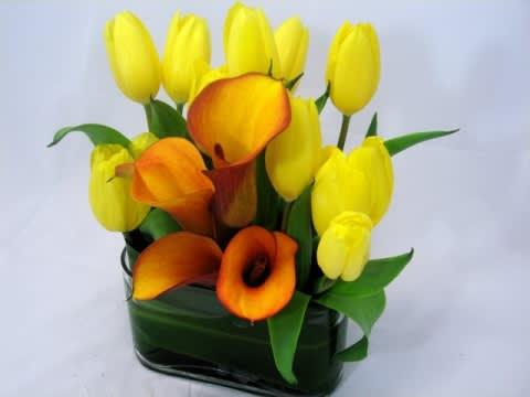 Mango Calla Lily With Tulips 504 In San Francisco Ca Fillmore