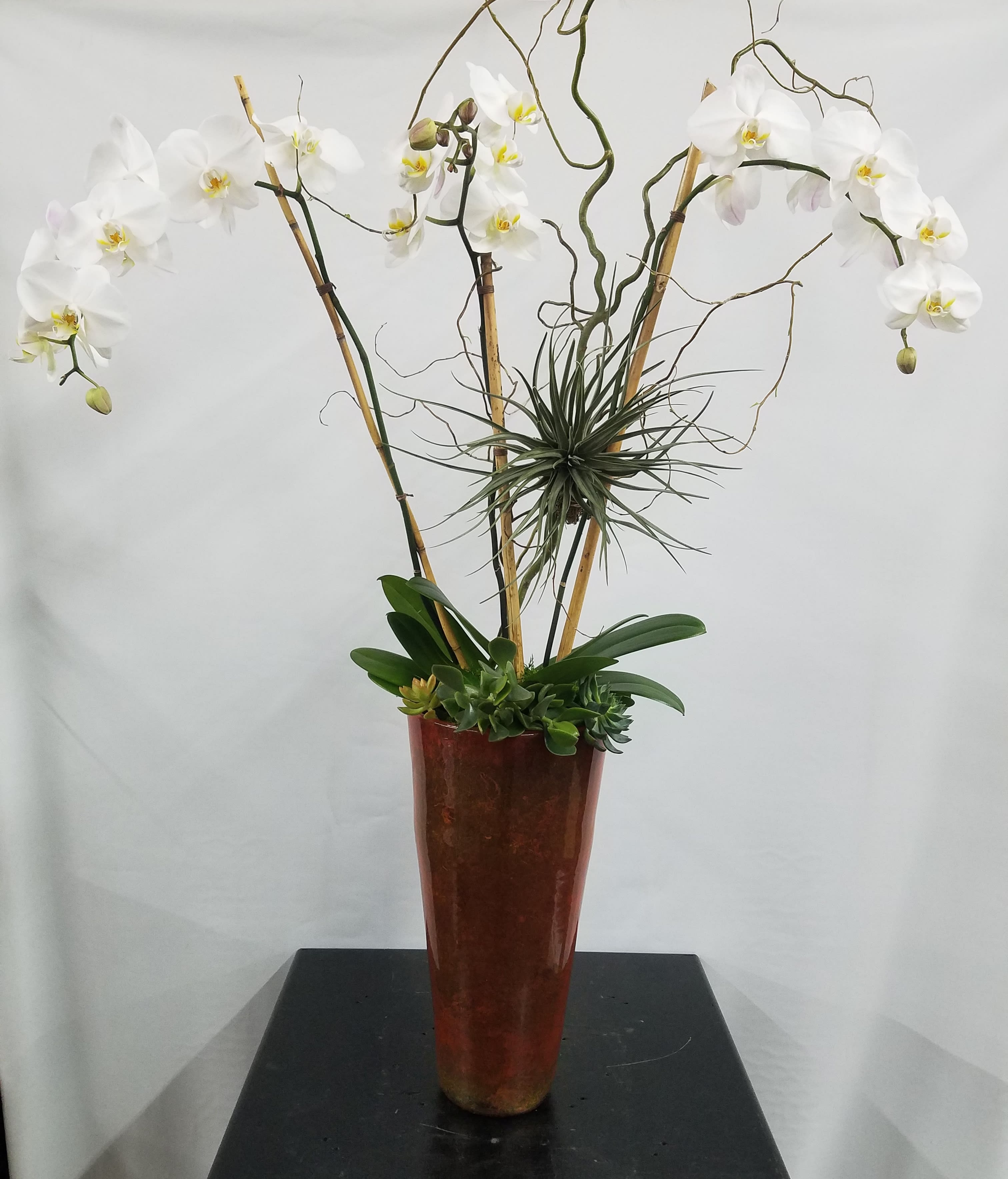 Extra Extraordinary Orchid Planter In A Rust Container In Los