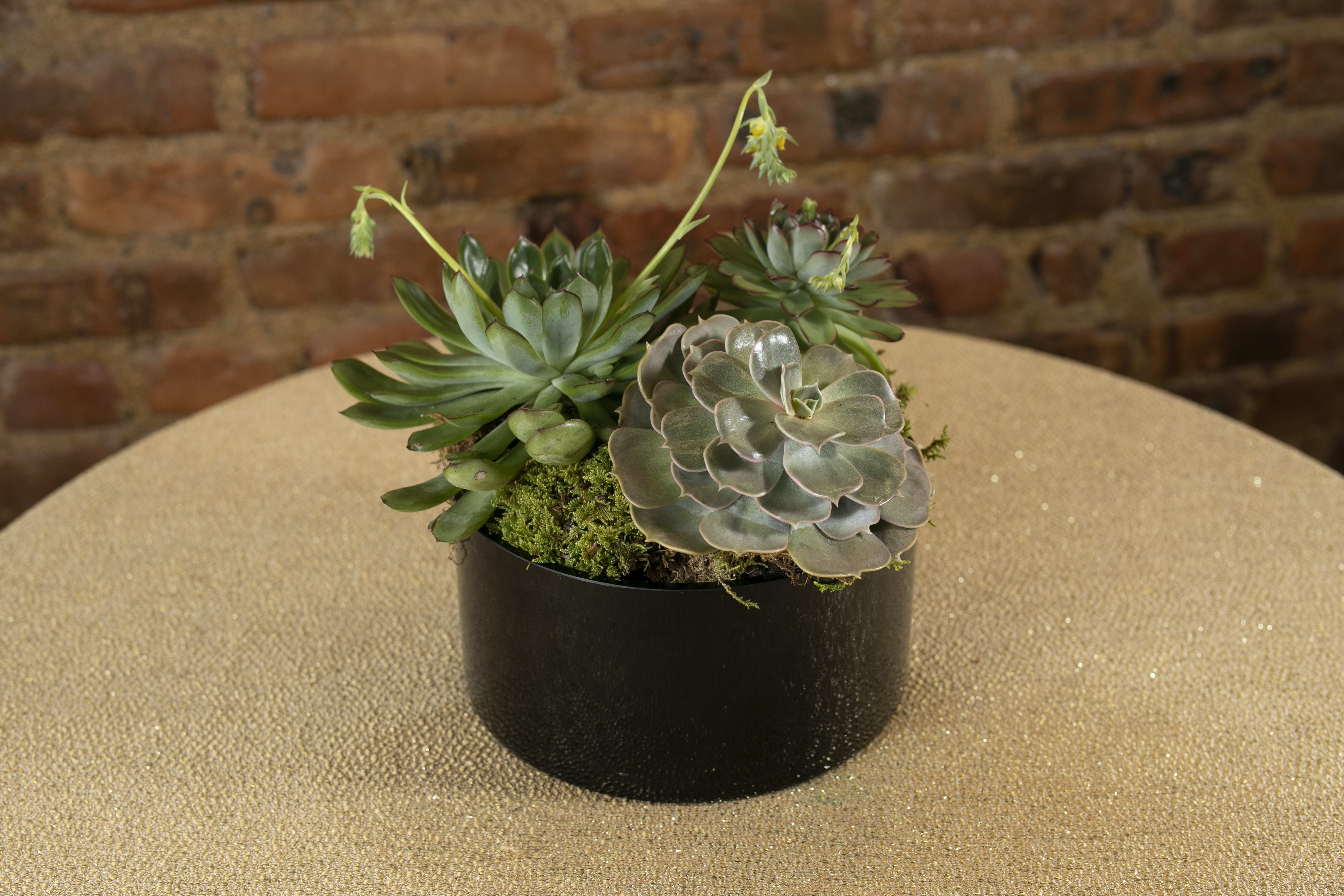 Succulent Dish Gardens In Brooklyn Ny The Avenue J Florist