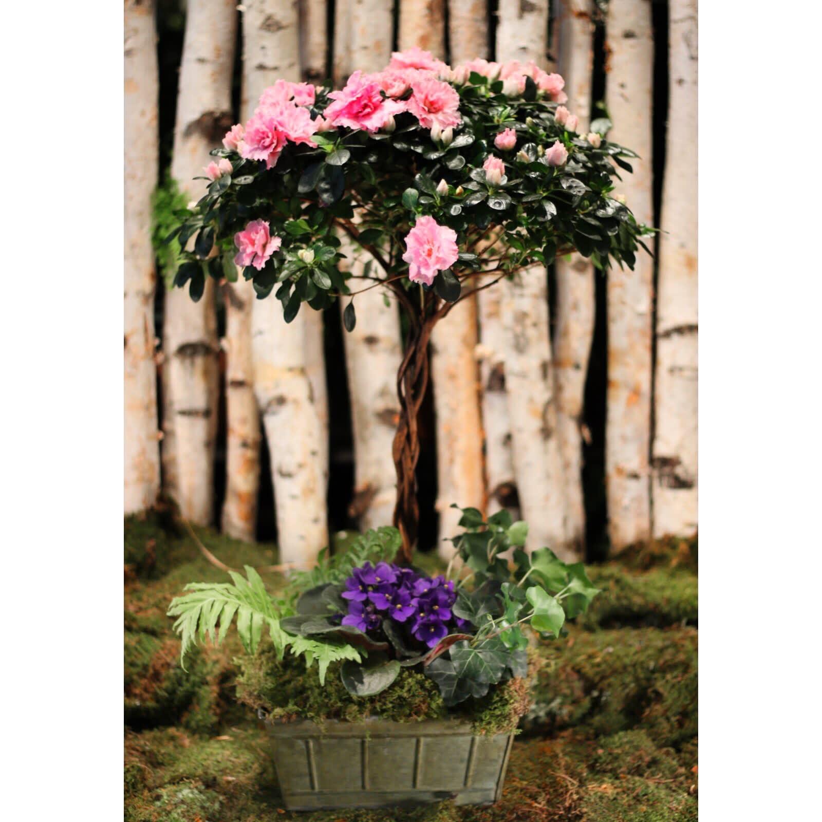 Braided Azalea Topiary Tree In New York Ny Flowers By
