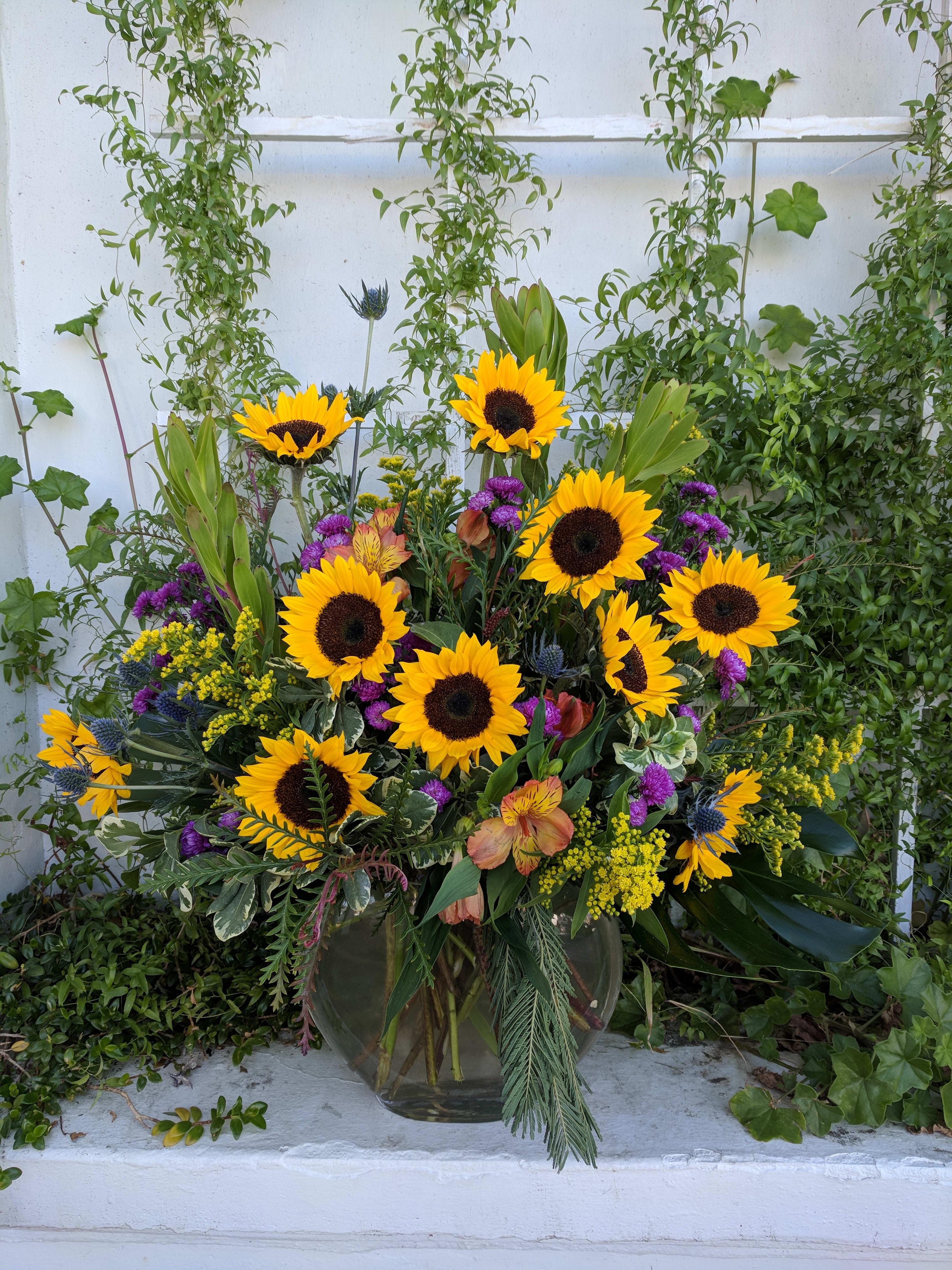 Sunflower Fields in Redlands, CA | Above the Stem
