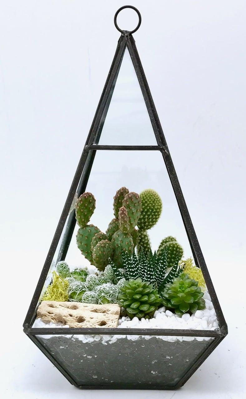 Cactus Succulents Terrarium In Geometric Glass In Los Angeles