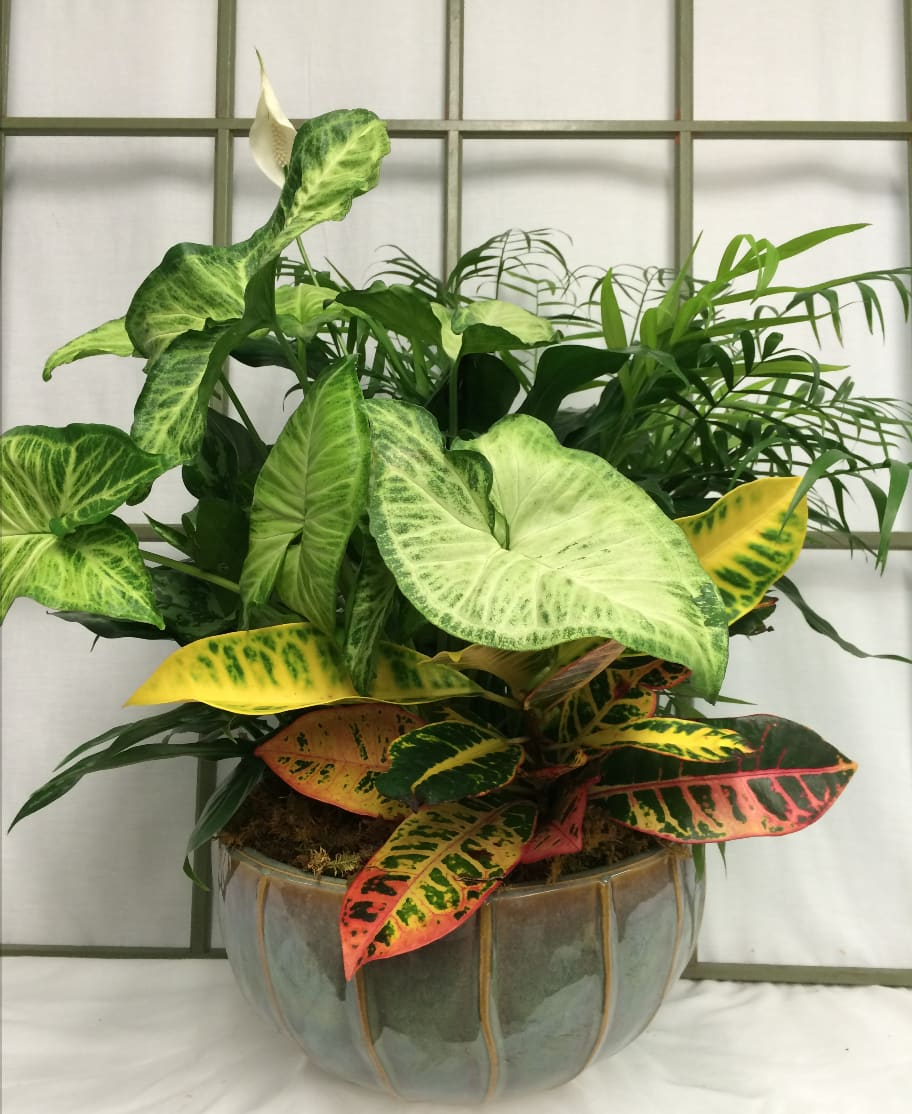Ceramic Container Of Mixed Foliage Plants In Saint Charles Mo