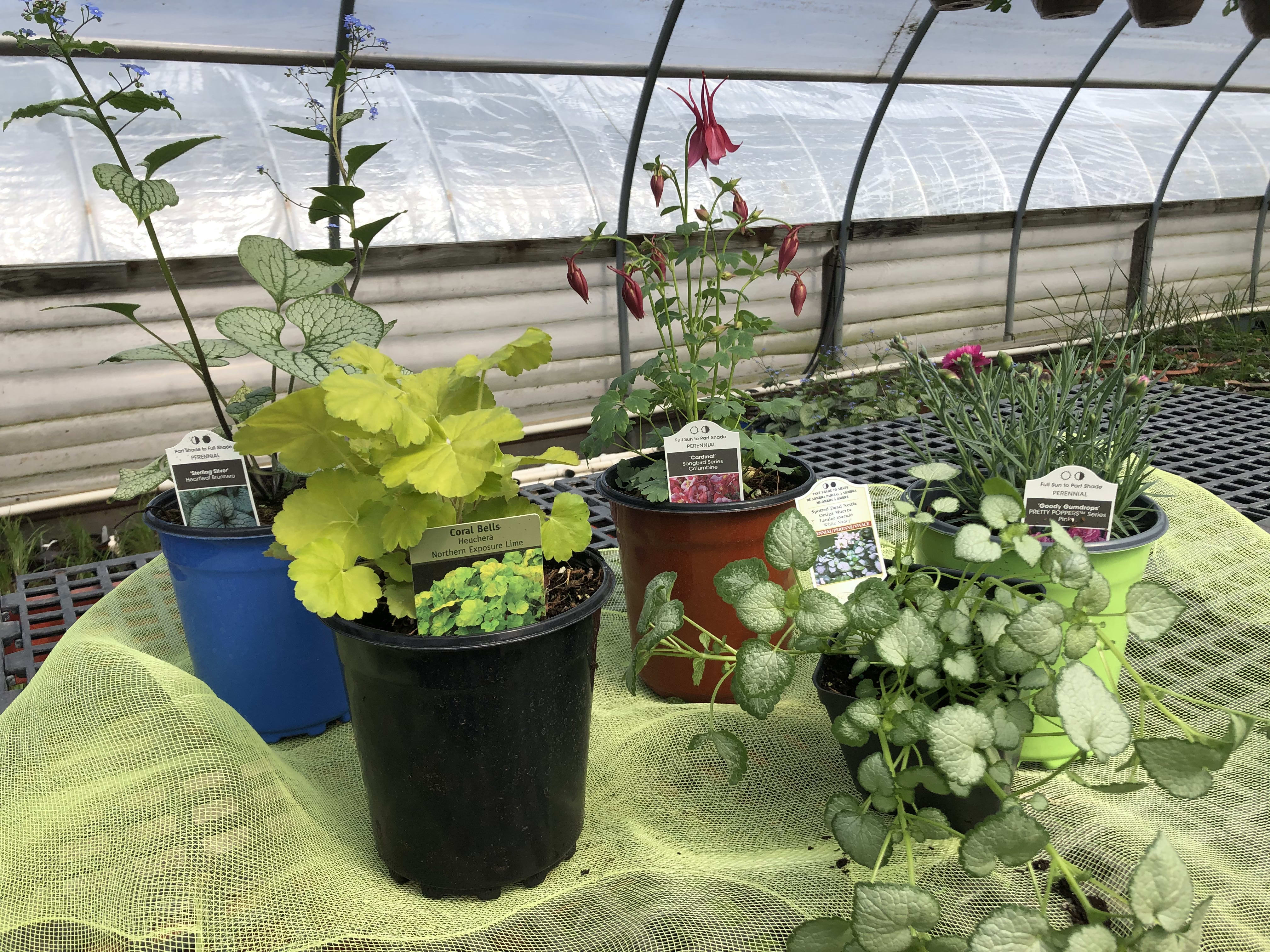 Perennial Planting Package Diy In Saint Charles Mo Parkview