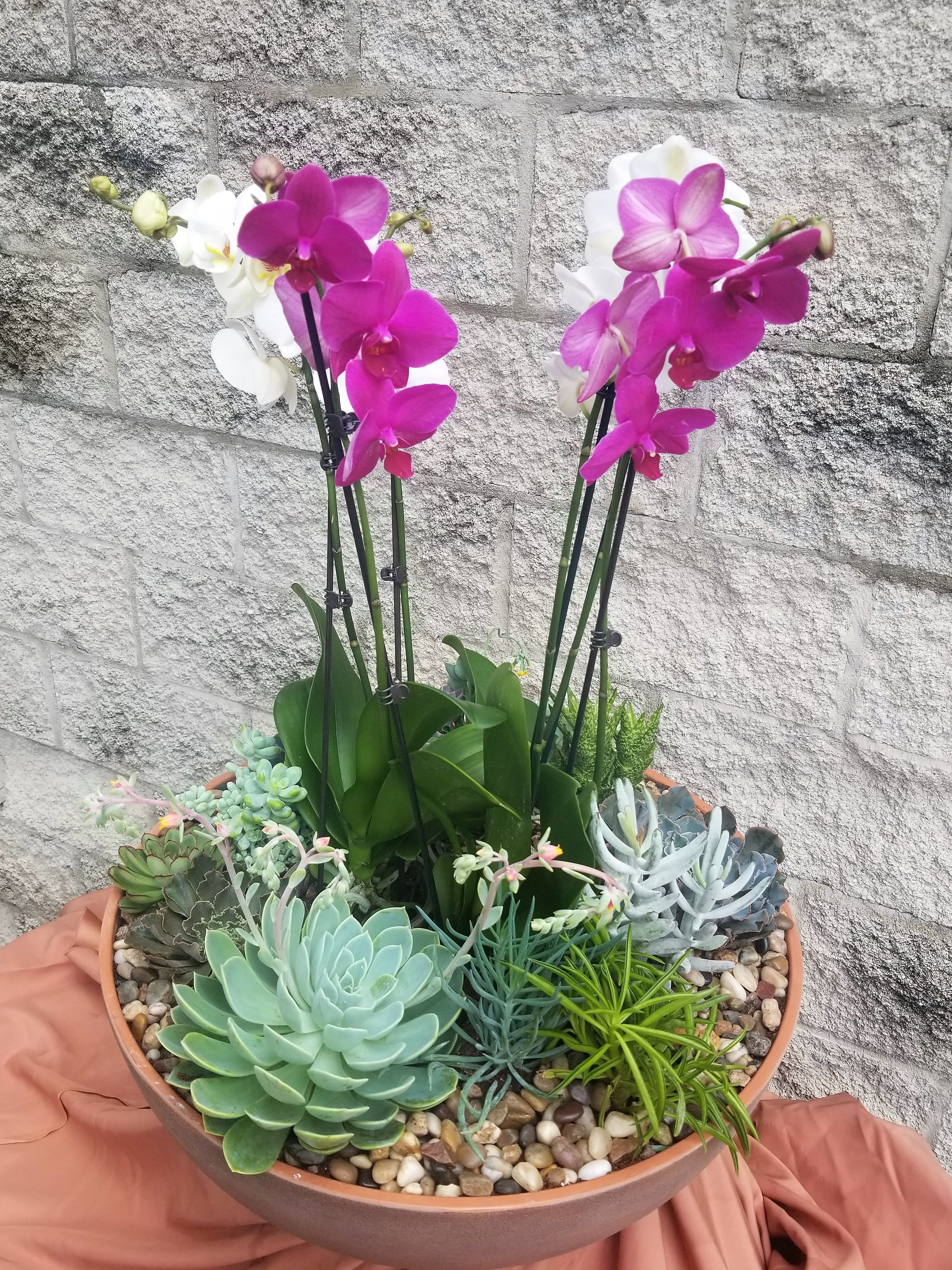 Grand Orchids And Succulents In Evanston Il Preston S Flowers
