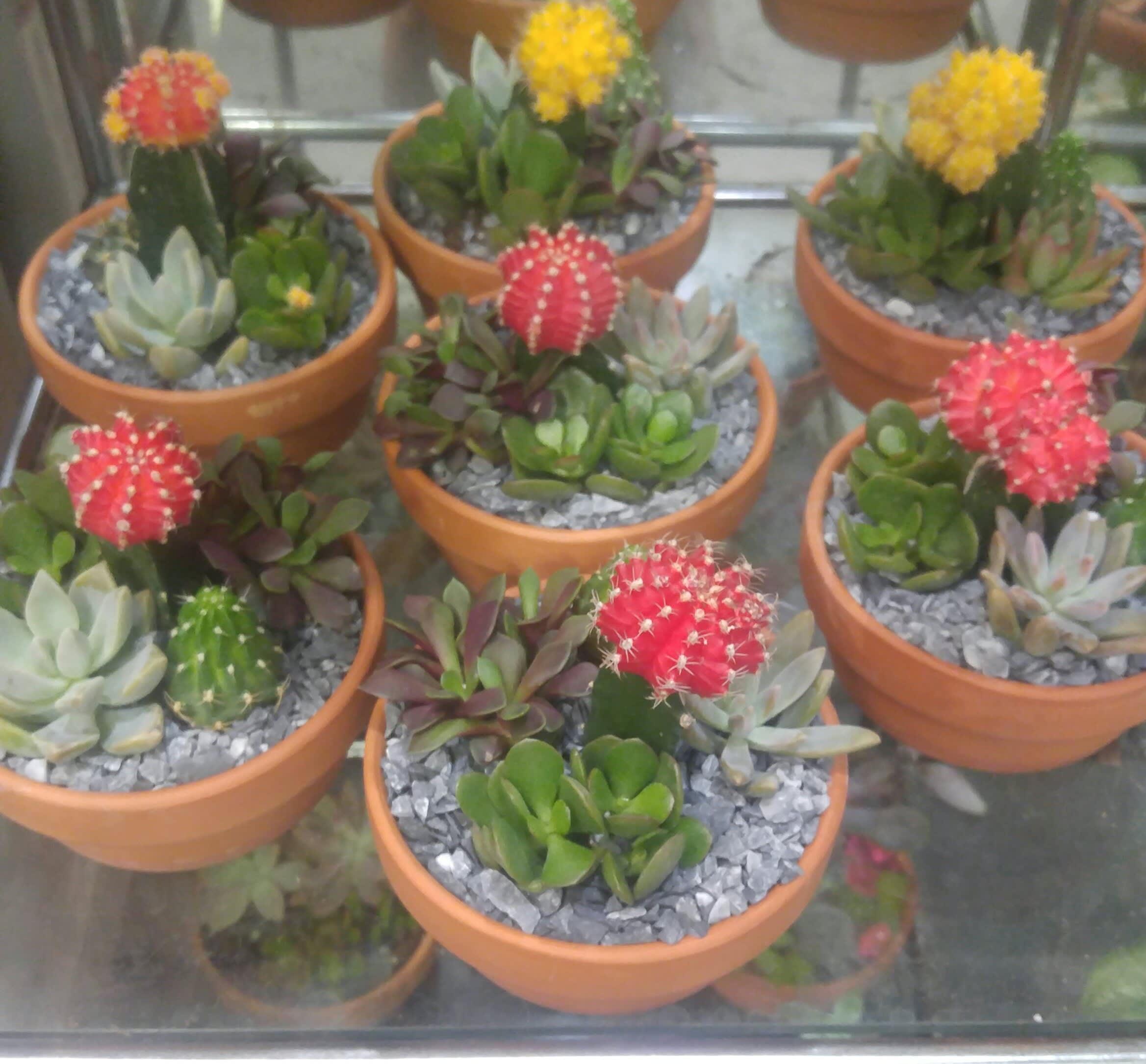 Colorful Cactus Gardens By Philadelphia Flower Market