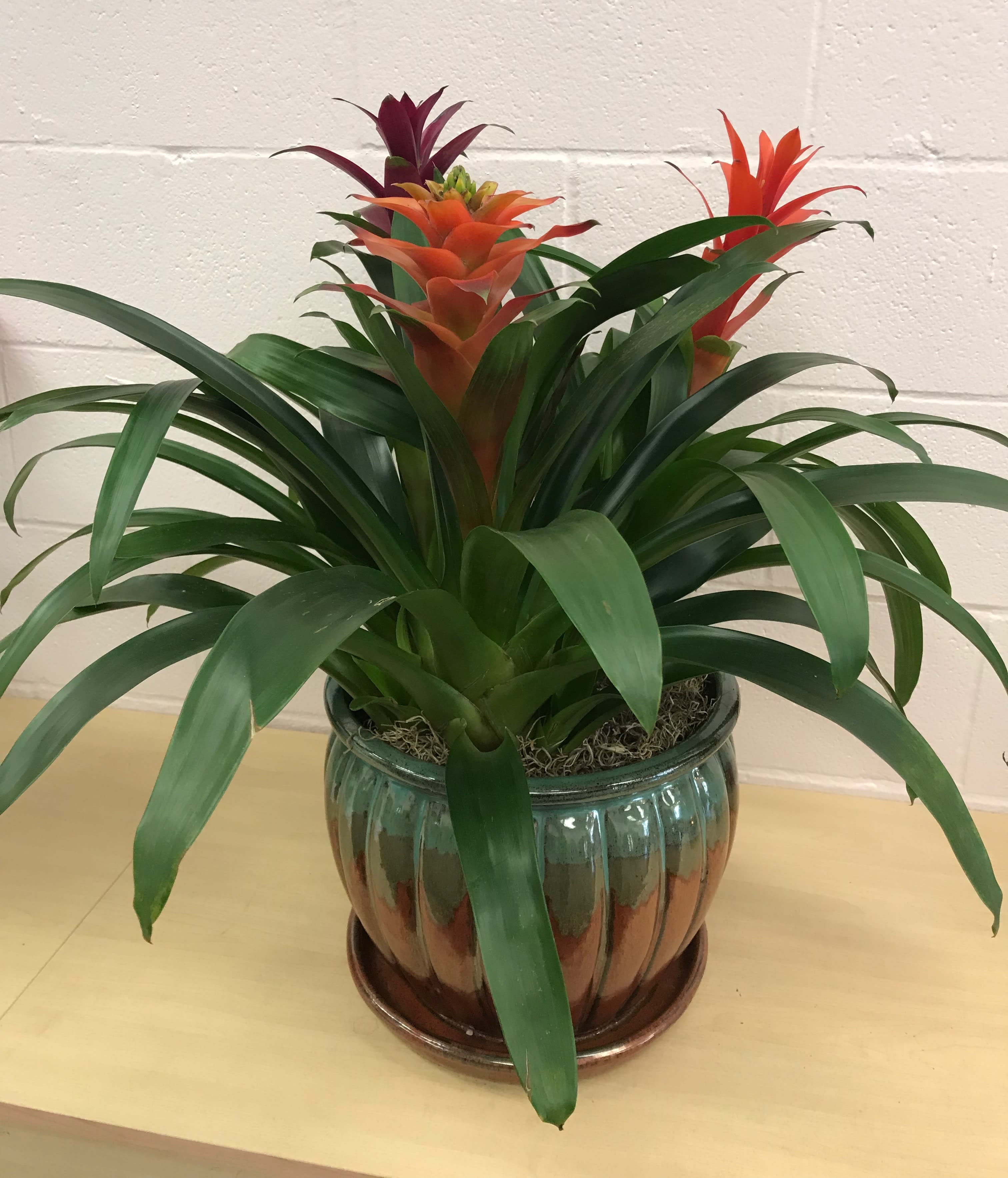 Tropical House Plants In Lawrenceburg In Artistic Floral