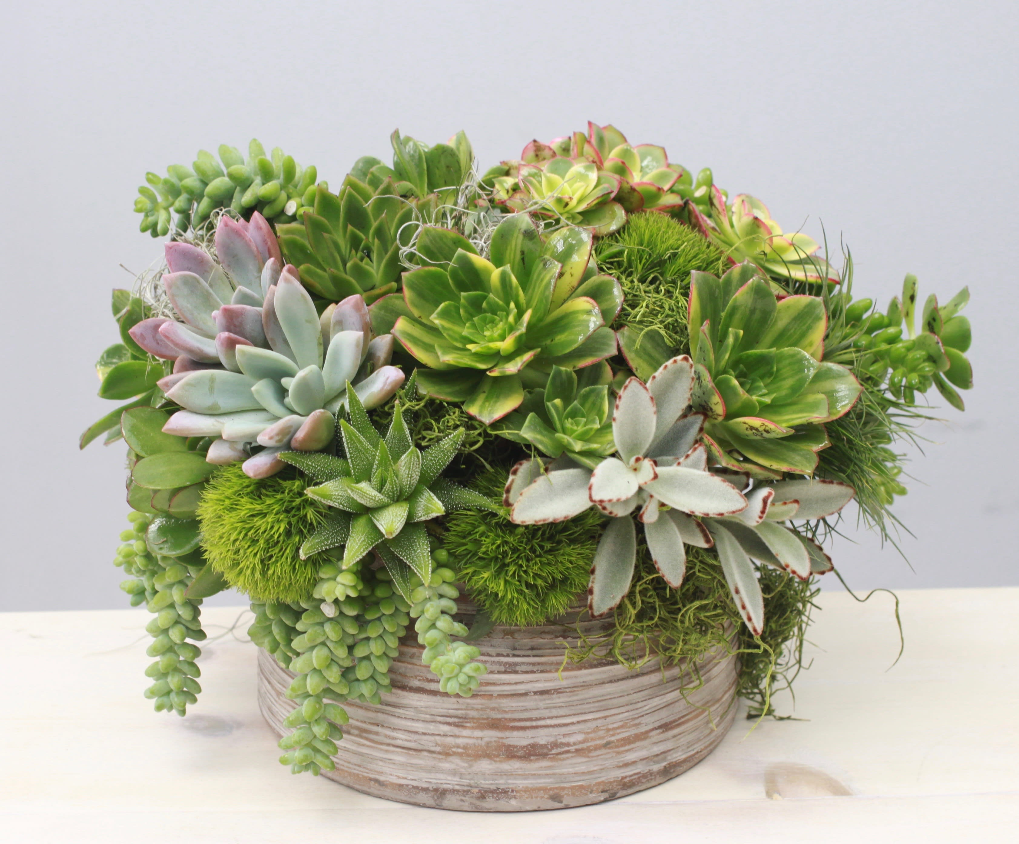 Sweet Succulents My Glendale Florist In Glendale Ca Glendale