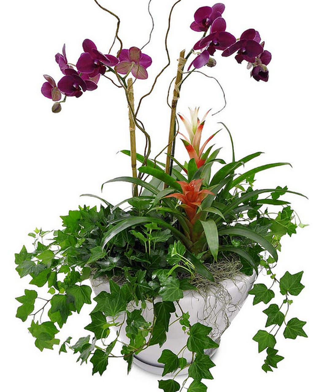 Orchids And Ivy Planter In Memphis Tn A Perfect Bloom Memphis