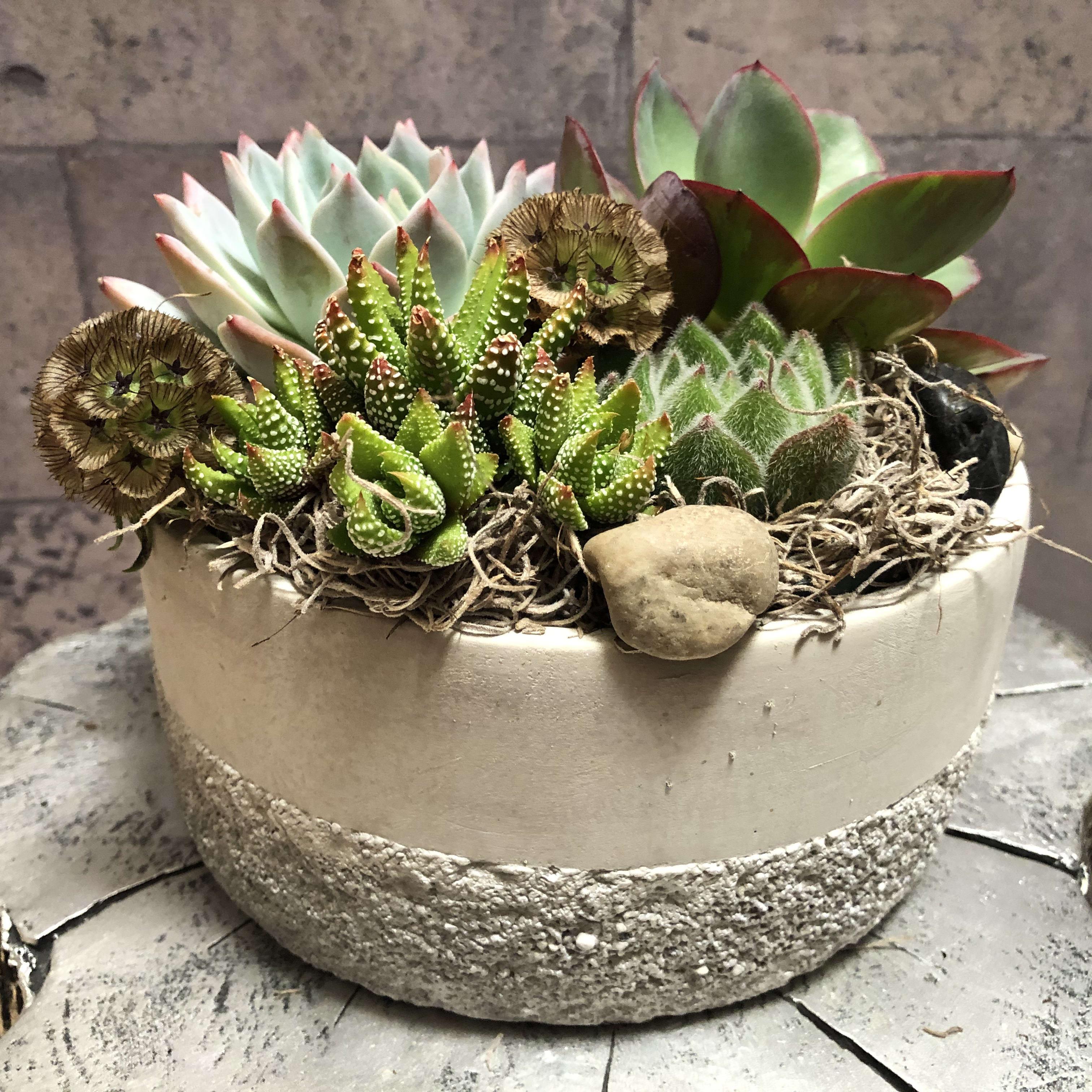 Echerevia Airplant Terrarium In Trophy Club Tx House Of Flowers