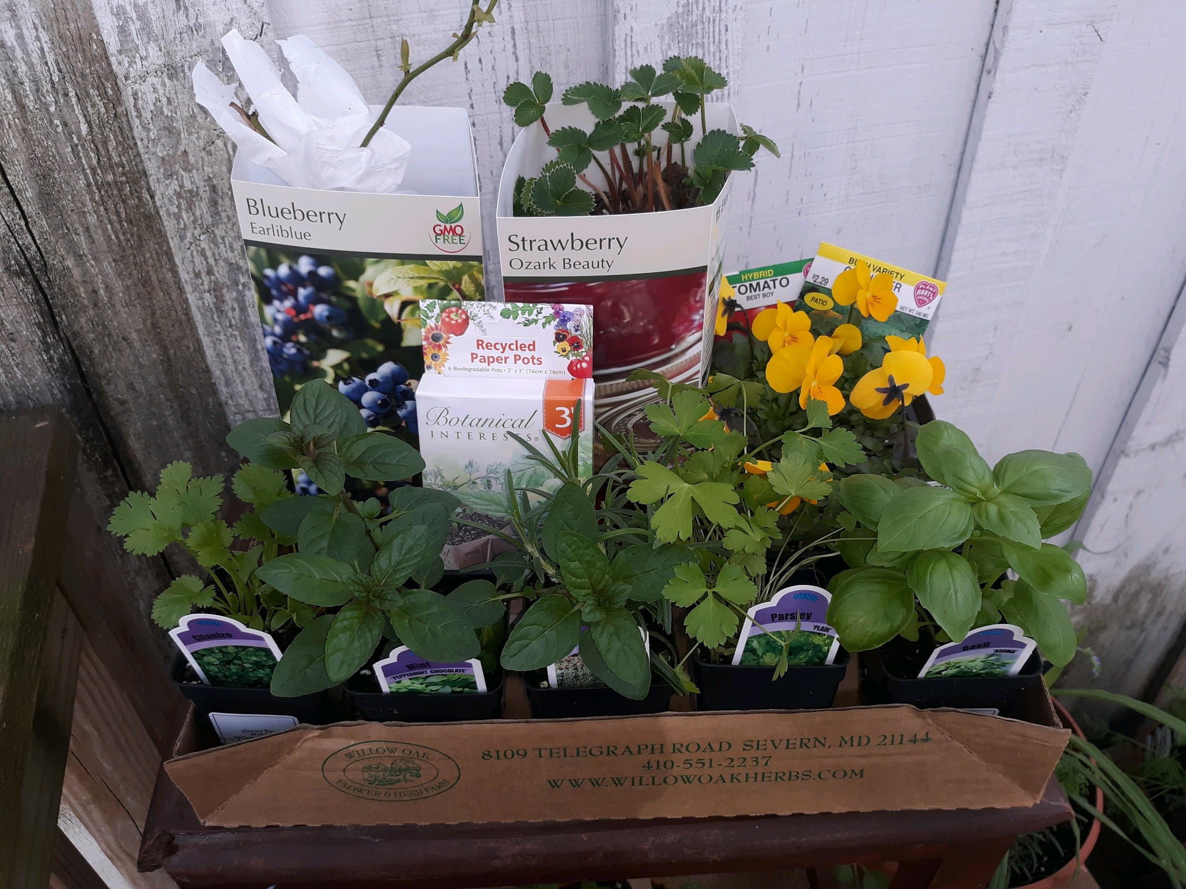 Food Plants Seed Starting Kit Delivering The Joy Of Gardening