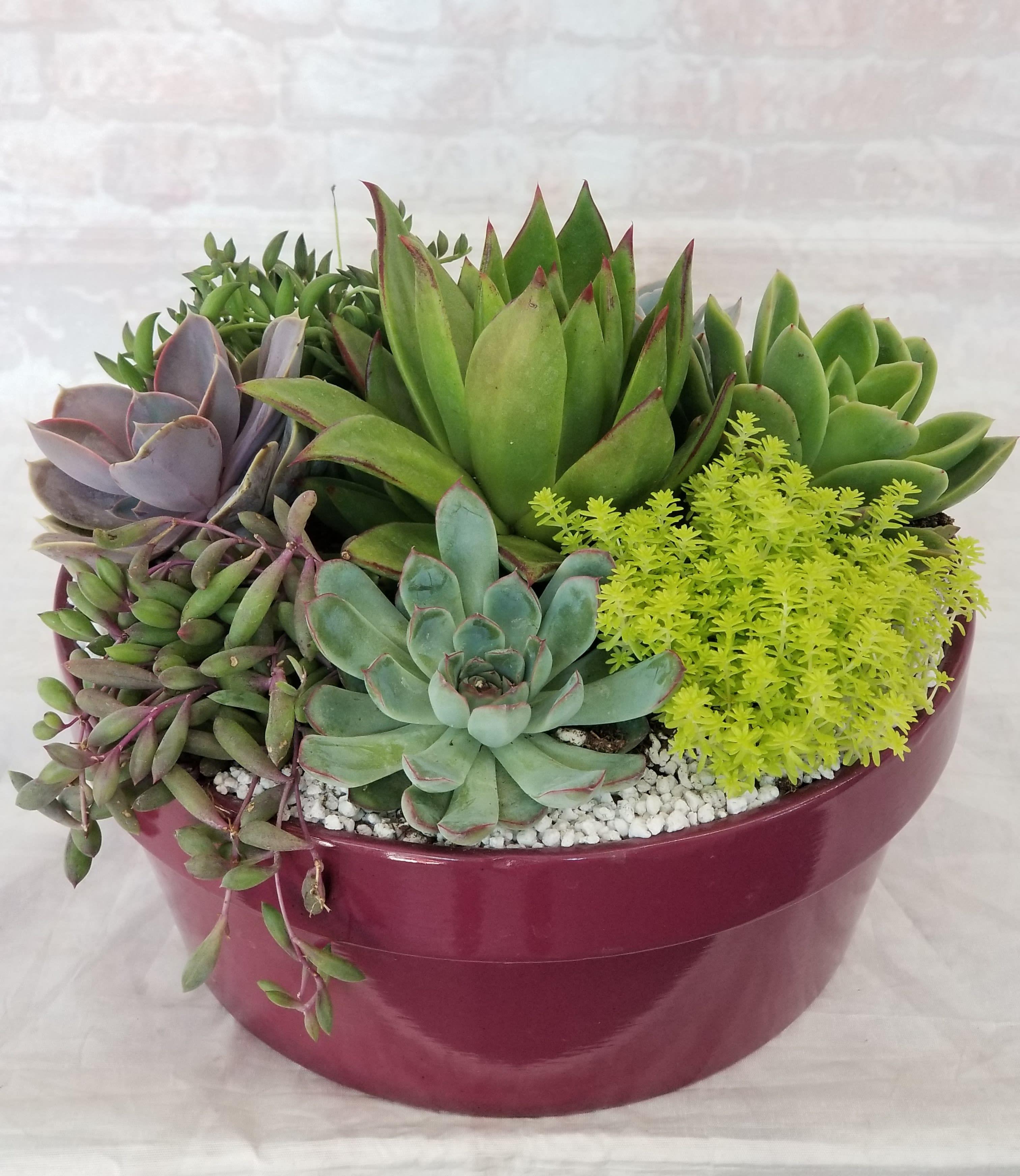 Large Dish Succulent Planter By Strelitzia Flower Company